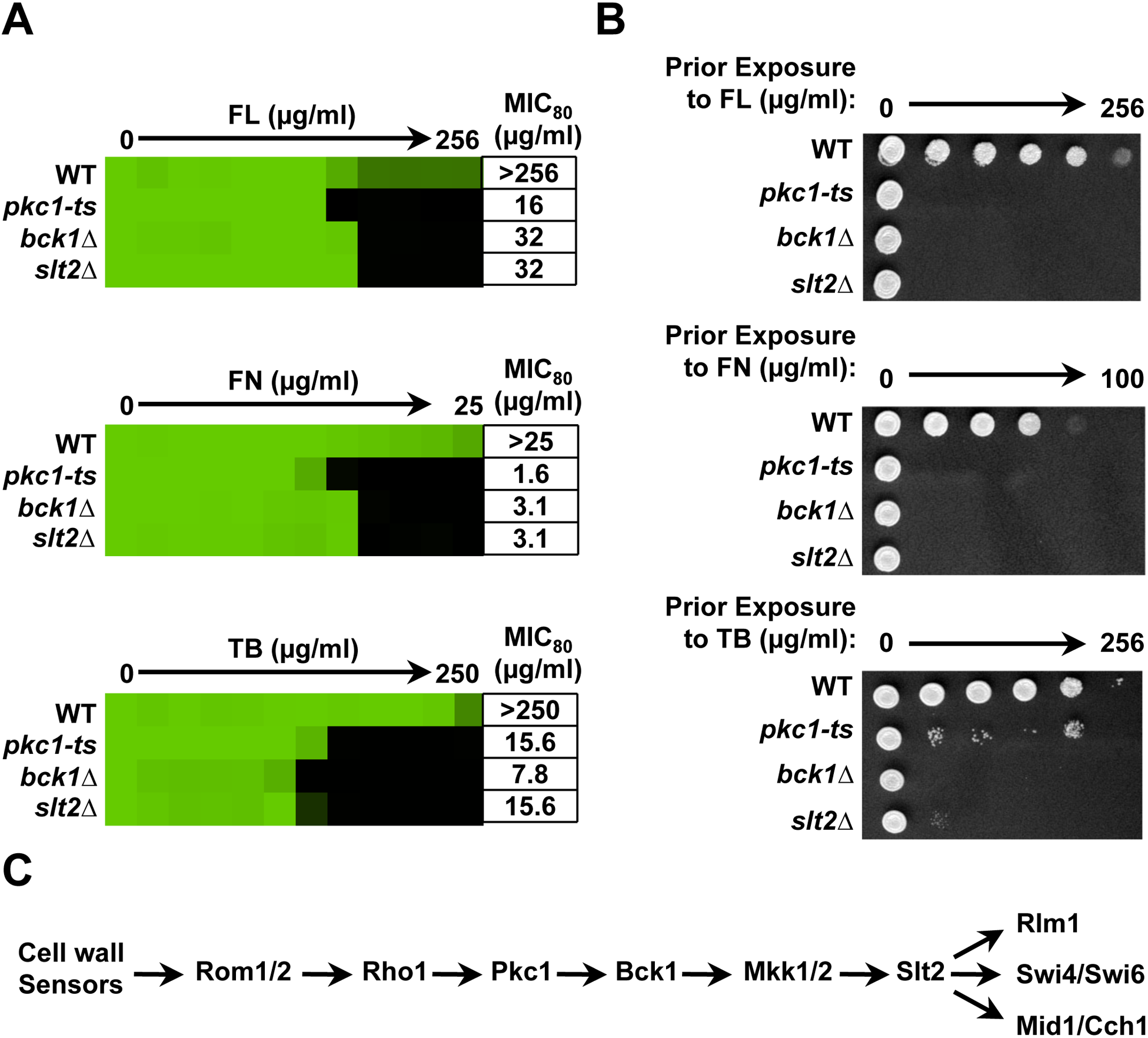 Pkc1 enables basal tolerance to ergosterol biosynthesis inhibitors via the MAPK cascade in <i>Saccharomyces cerevisiae</i>.