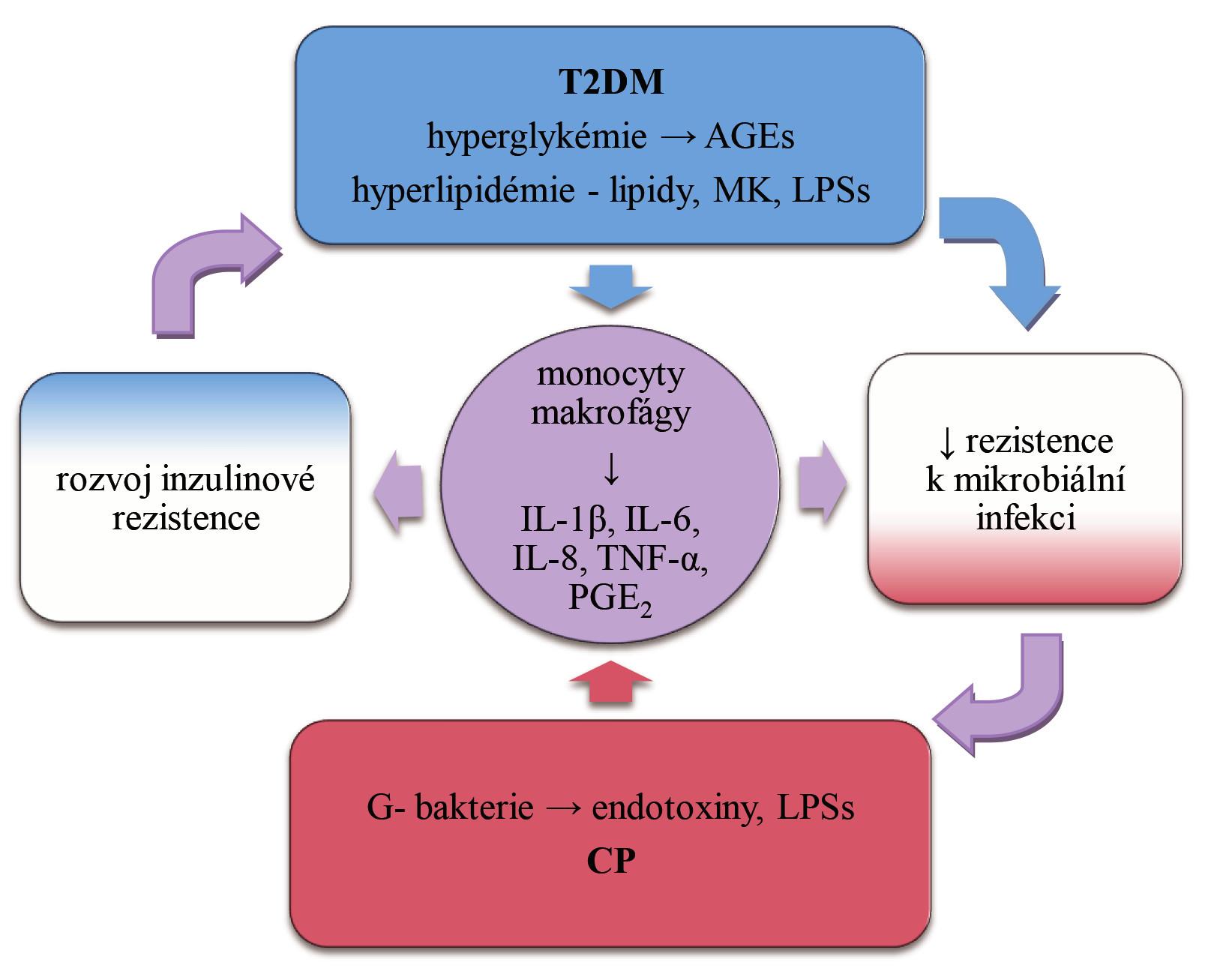 Význam cytokinů v obousměrném vztahu chronické parodontitidy (CP) a diabetes mellitus 2. typu (T2DM), upraveno podle [26, 31].