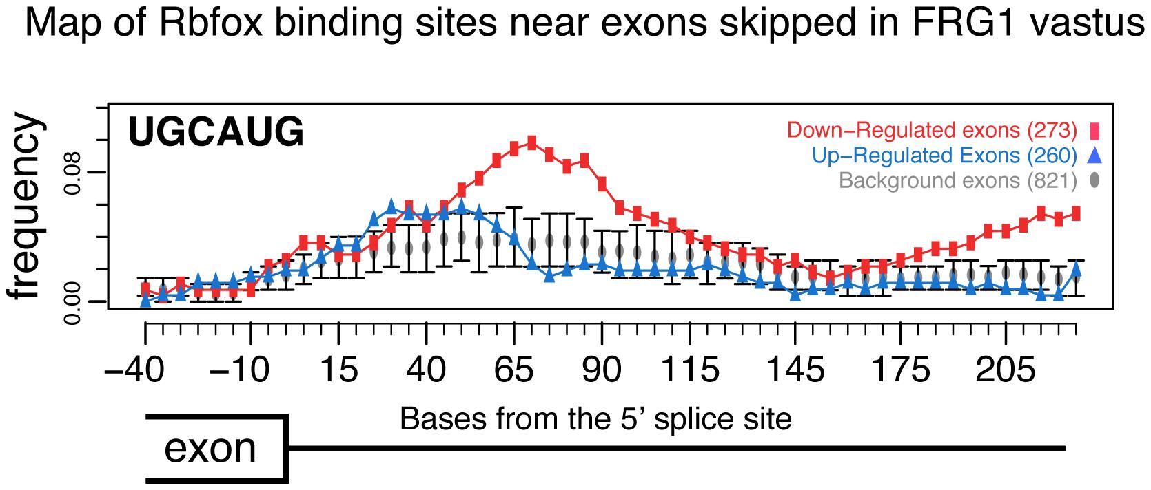 RNA map of Rbfox motifs downstream of exons.