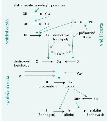 Schéma 1. Koagulační kaskáda