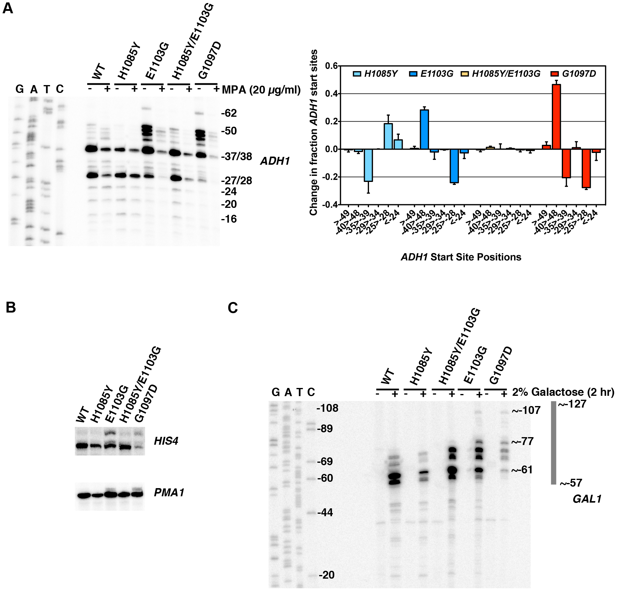 Pol II TL contributes to start site selection at a number of genes.