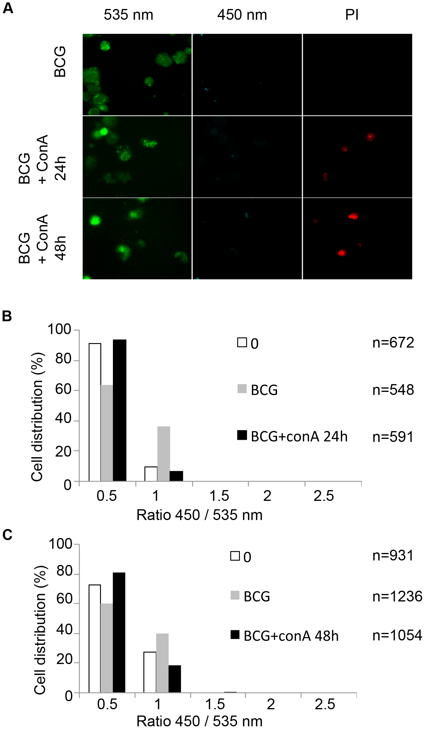 Necrosis induction does not lead to the release of mycobacteria from the phagolysosome to the cytosol.