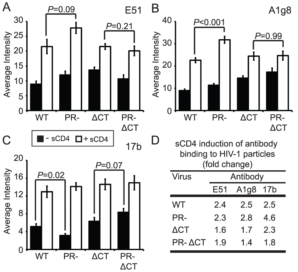 Analysis of sCD4-induced conformational changes on HIV-1 virions.