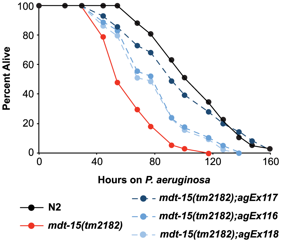 MDT-15 is required for defense against <i>P. aeruginosa</i> infection.