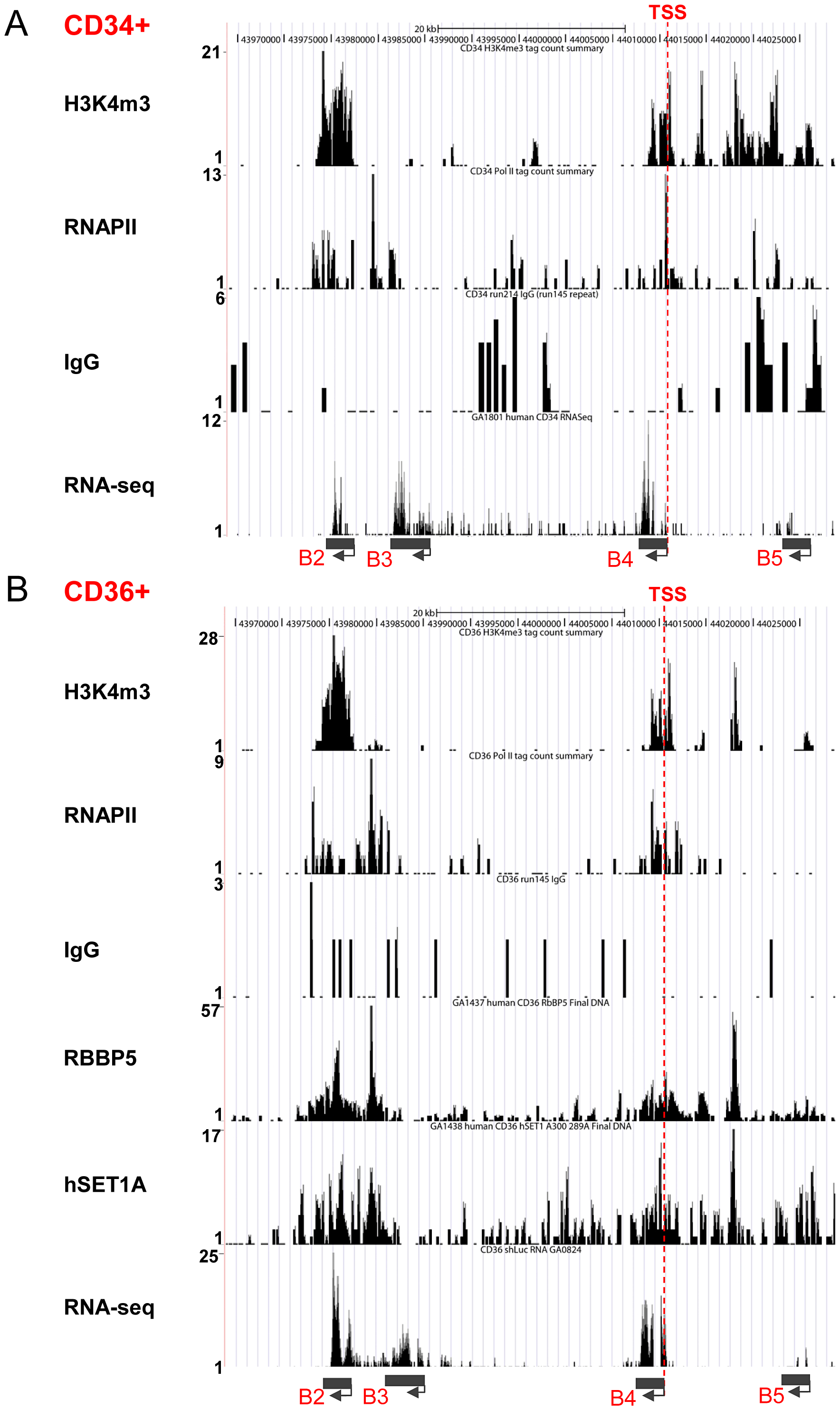 Recruitment of the hSET1A complex and H3K4me3 correlates with expression of the <i>HoxB4</i> gene during hematopoiesis.