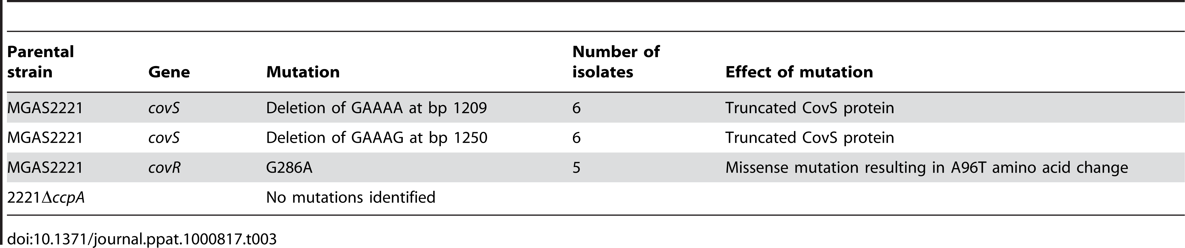 <i>covRS</i> mutations detected in GAS isolates from mice spleens following intramuscular inoculation with strain MGAS2221 and 2221Δ<i>ccpA</i>.