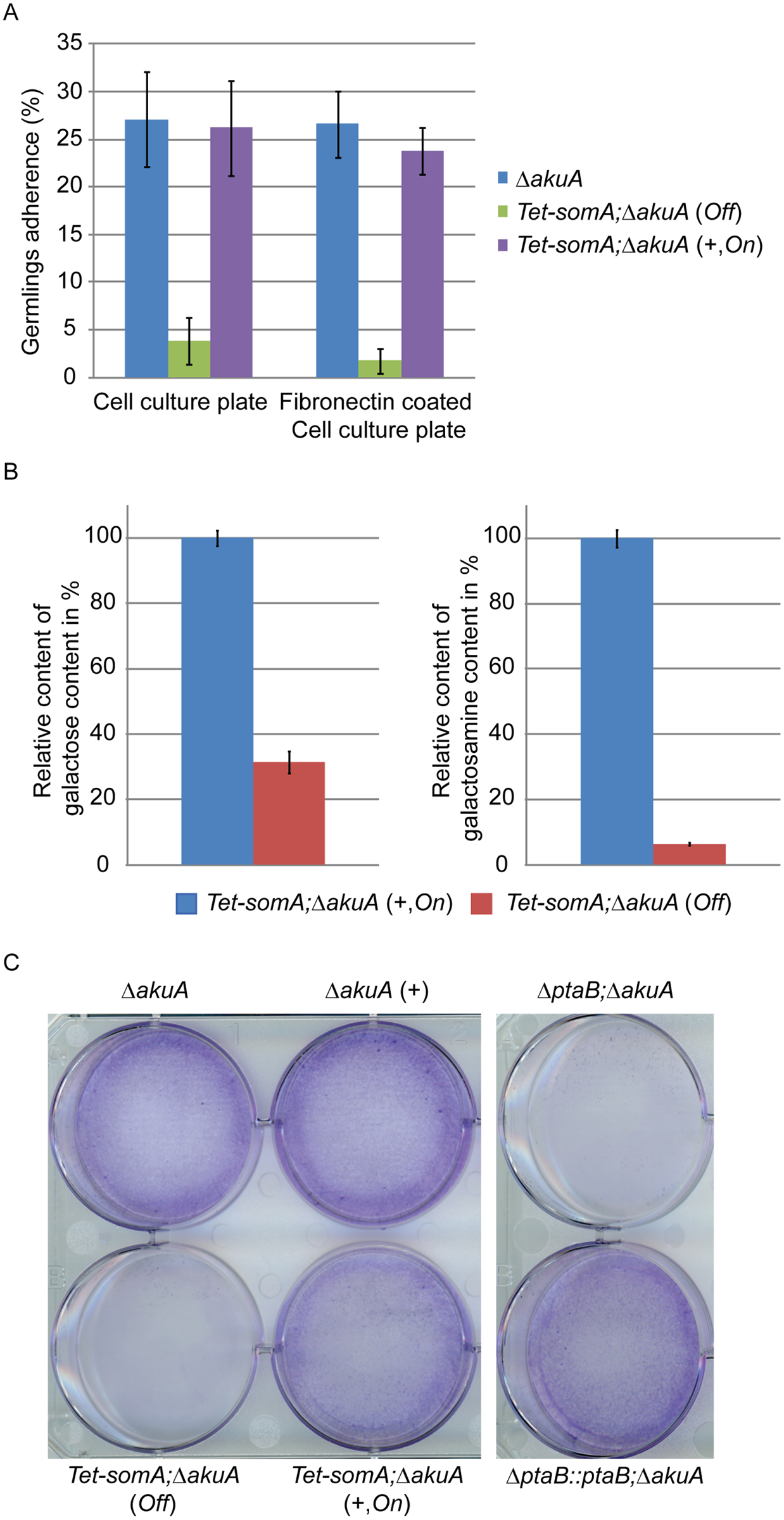 SomA and PtaB are involved in biofilm formation in <i>A</i>. <i>fumigatus</i>.