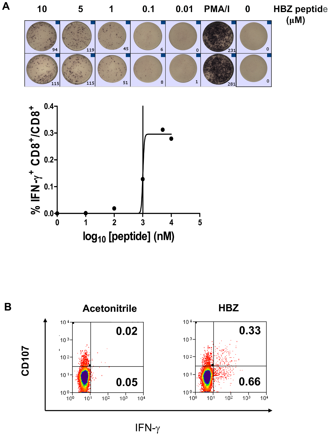 HBZ-specific CD8<sup>+</sup> T cells are directly detectable ex vivo.