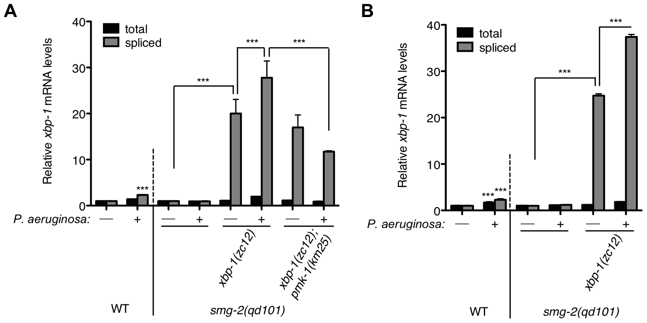 Pathogen-induced immune activation exacerbates ER stress levels in XBP-1 deficiency in <i>C. elegans</i>.