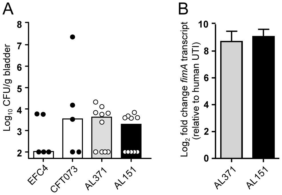 Murine colonization and type 1 fimbriae expression by clinical isolates.