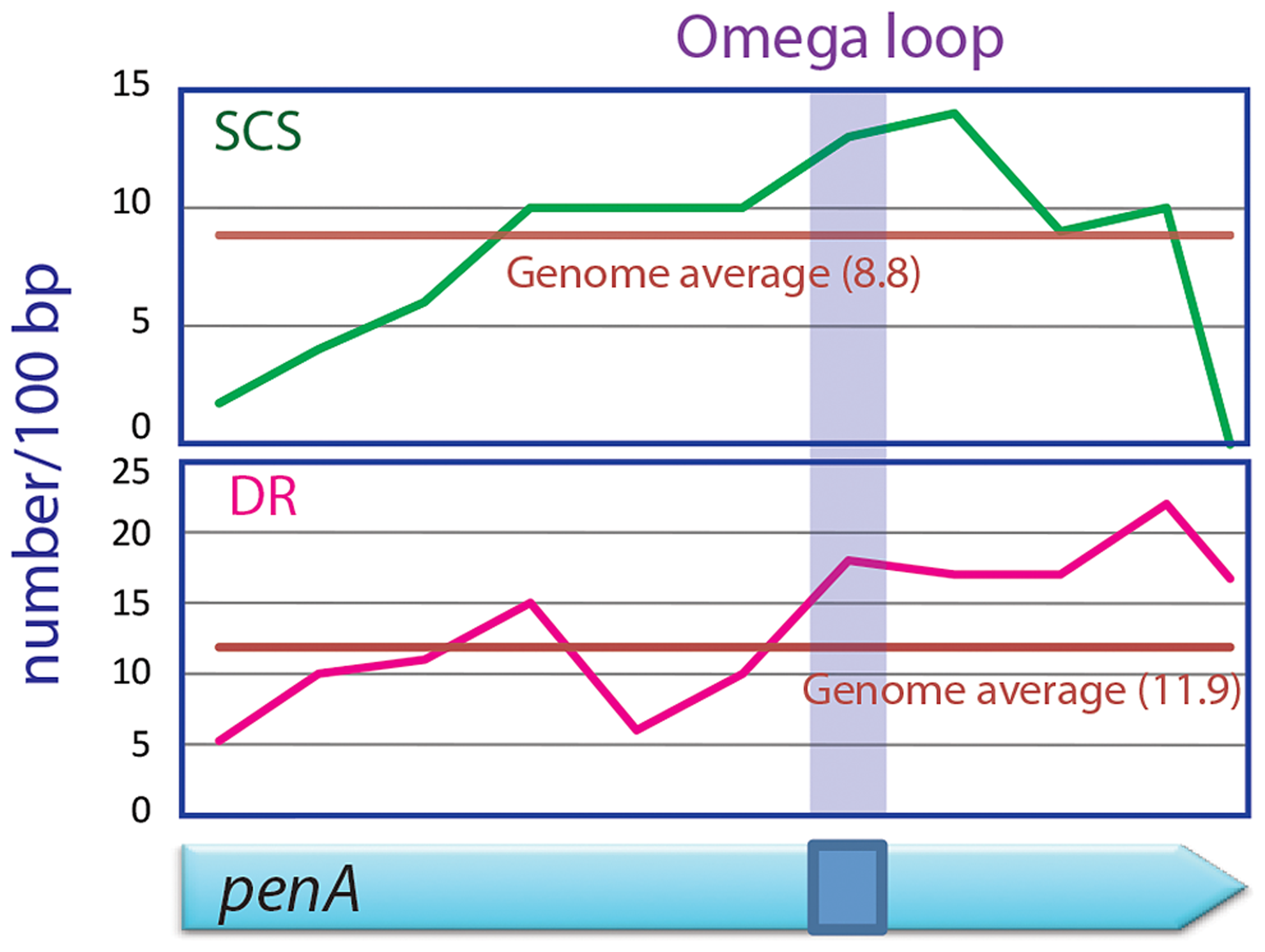 SCSs and direct repeats contents in the omega loop compared with the rest of the <i>penA</i> gene and the genome of <i>B. thailandensis</i>.