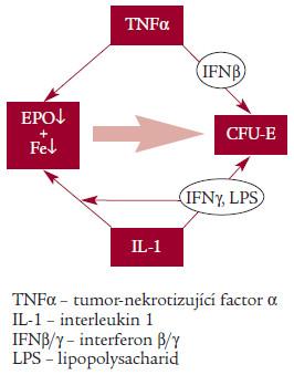 Schéma. Základní patogenetický mechanizmus ACD.