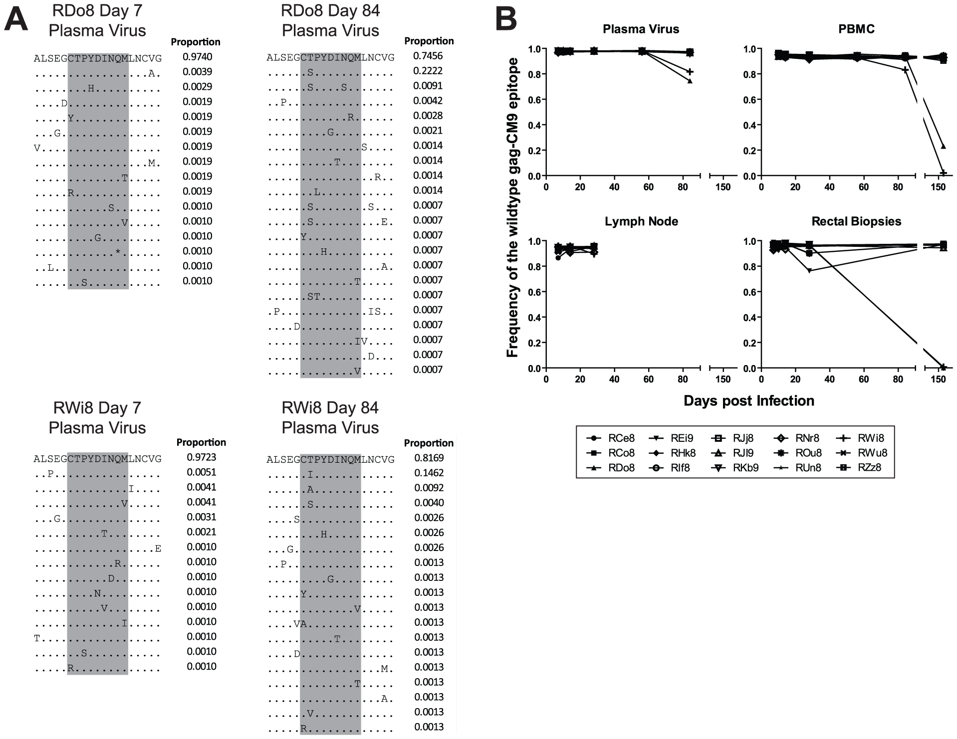 The gag-CM9 MamuA*01-restricted SIVmac239 CD8 T cell epitope escaped via a mutation of a single anchor residue that was observed late during the chronic phase of infection.