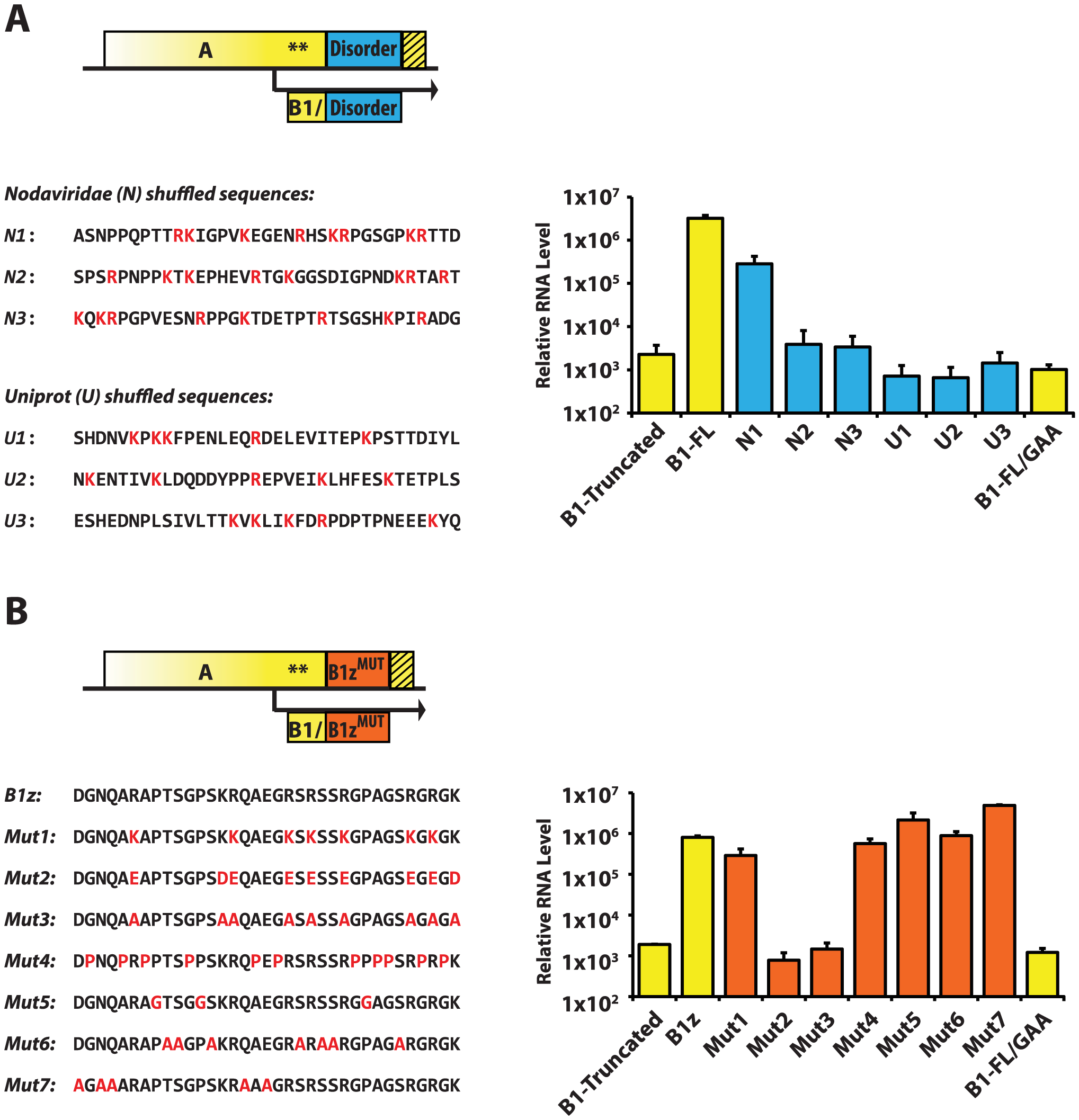 RNA1 replication: Sequence requirements in the A<sup>C-TERM</sup> region.