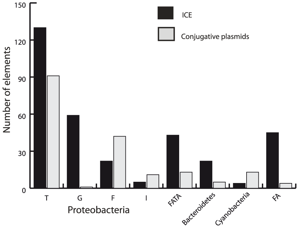 Distribution of ICEs and conjugative plasmids in the different groups of the VirB4 phylogenetic tree.
