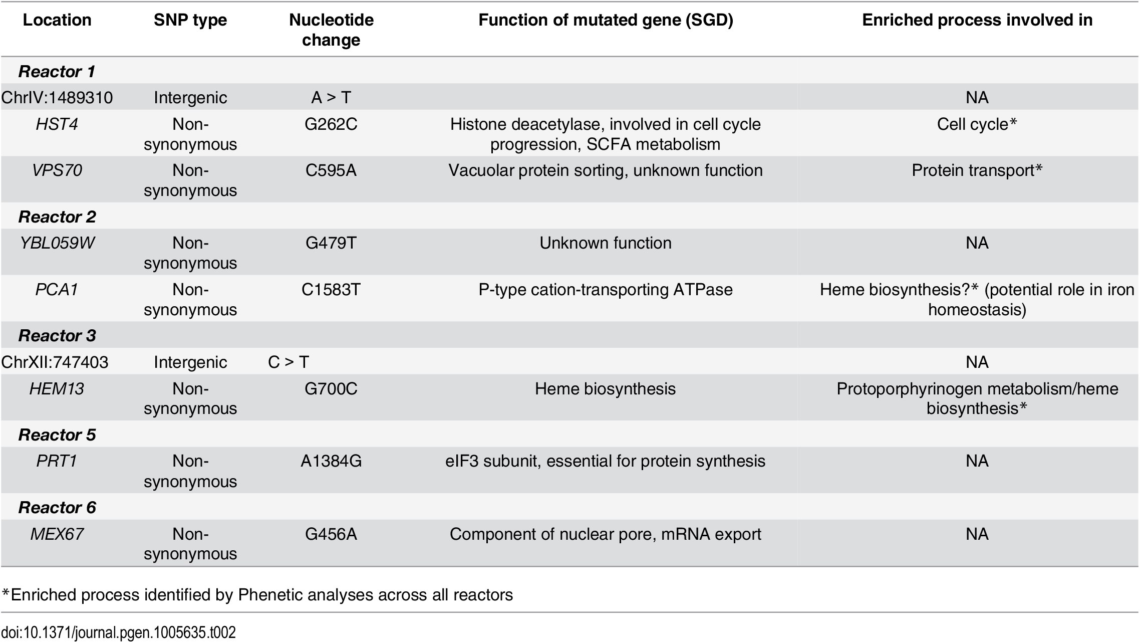 SNPs in evolved lineages selected for introduction in non-ethanol tolerant strain.