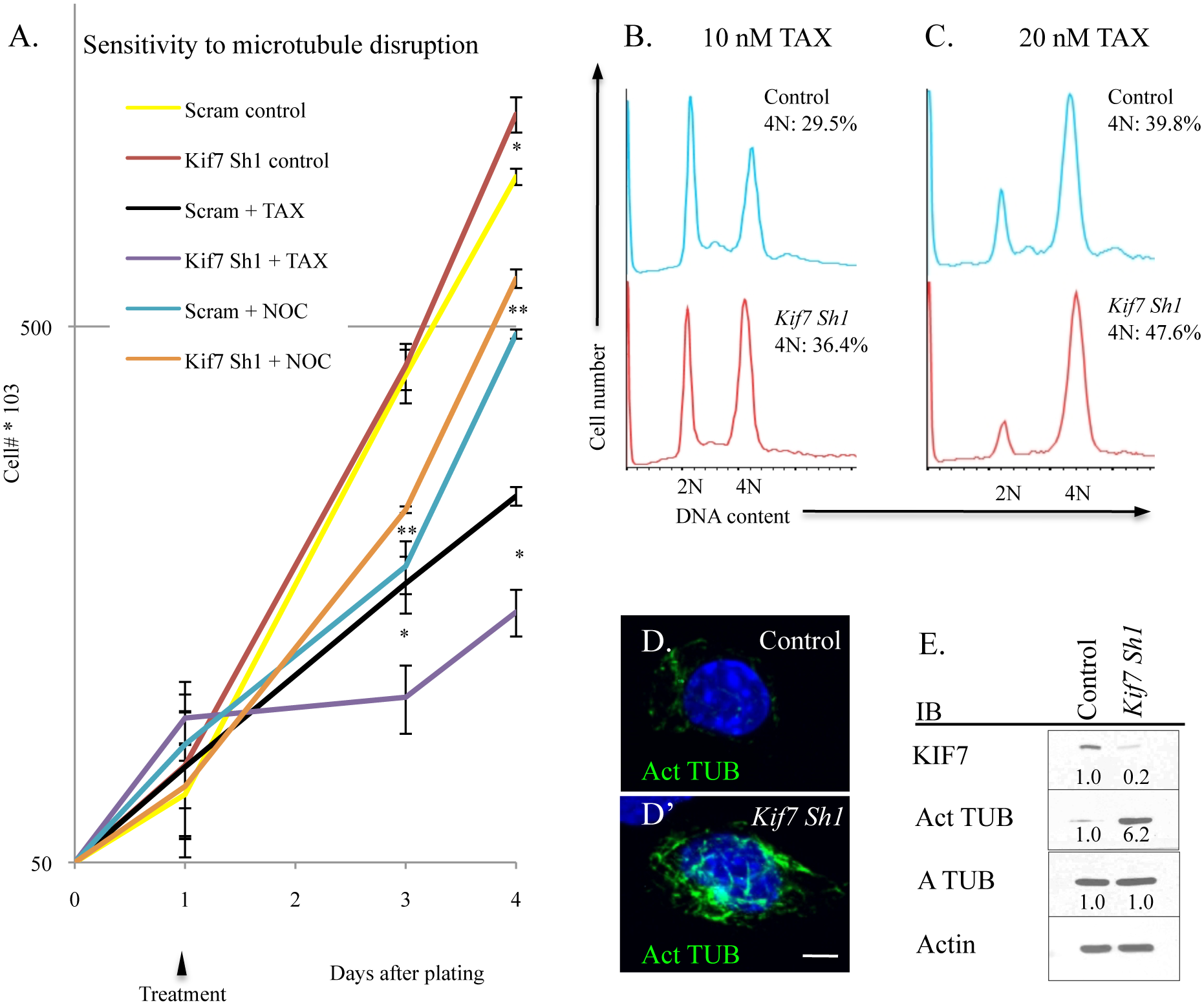 KIF7 regulates microtubule mstability in mouse lung epithelial (MLE15) cells.