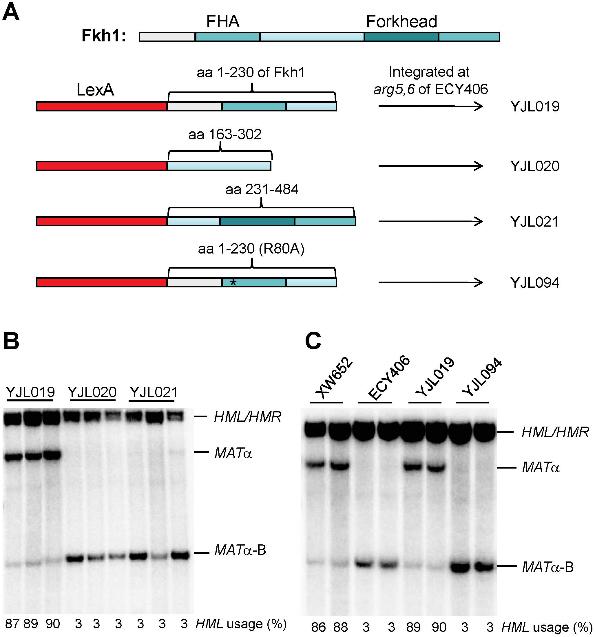 The FHA Domain of Fkh1 Is Responsible for Donor Preference Regulation.