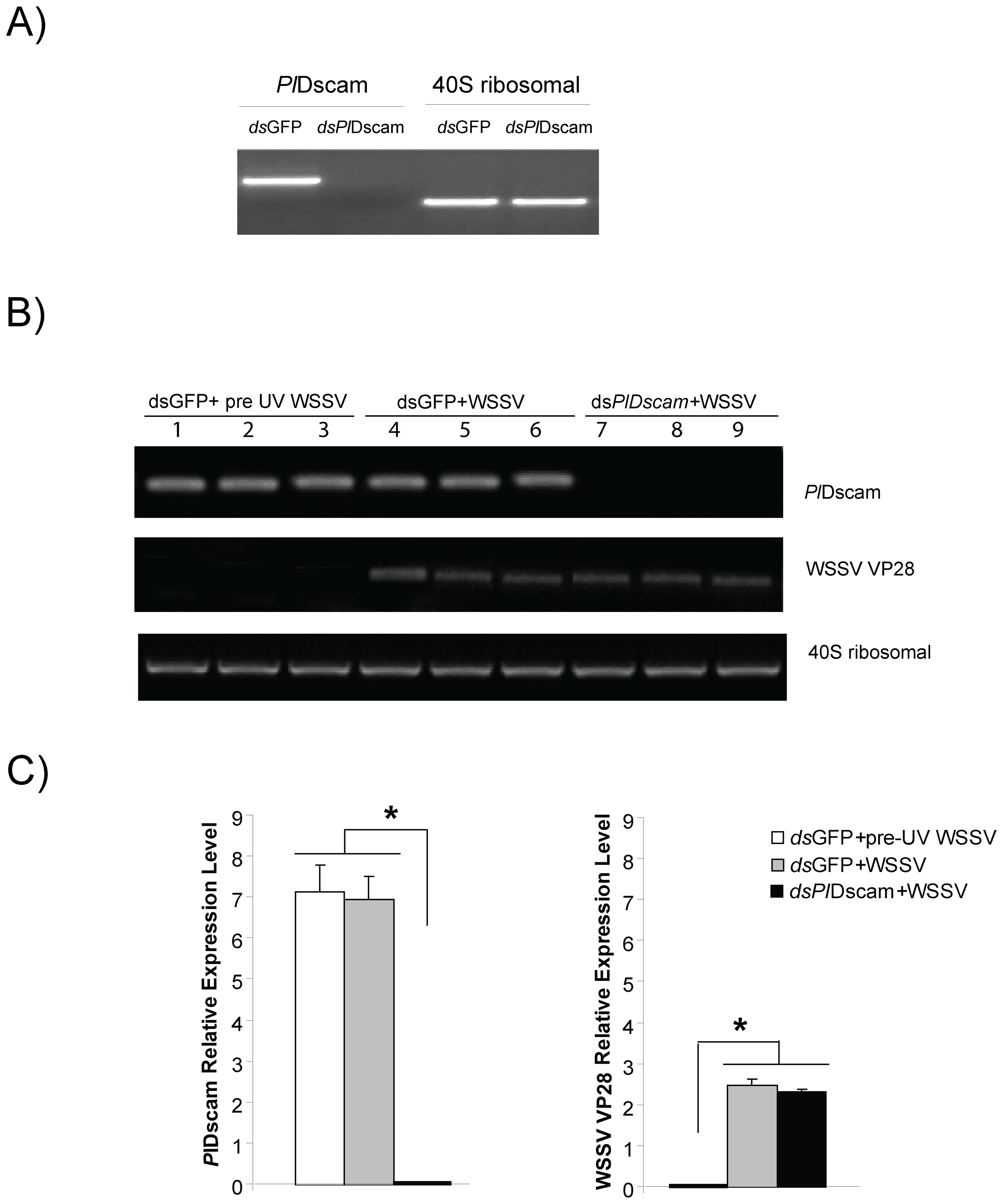 Effect of <i>Pl</i>Dscam silencing on viral replication of WSSV <i>in vitro</i>.