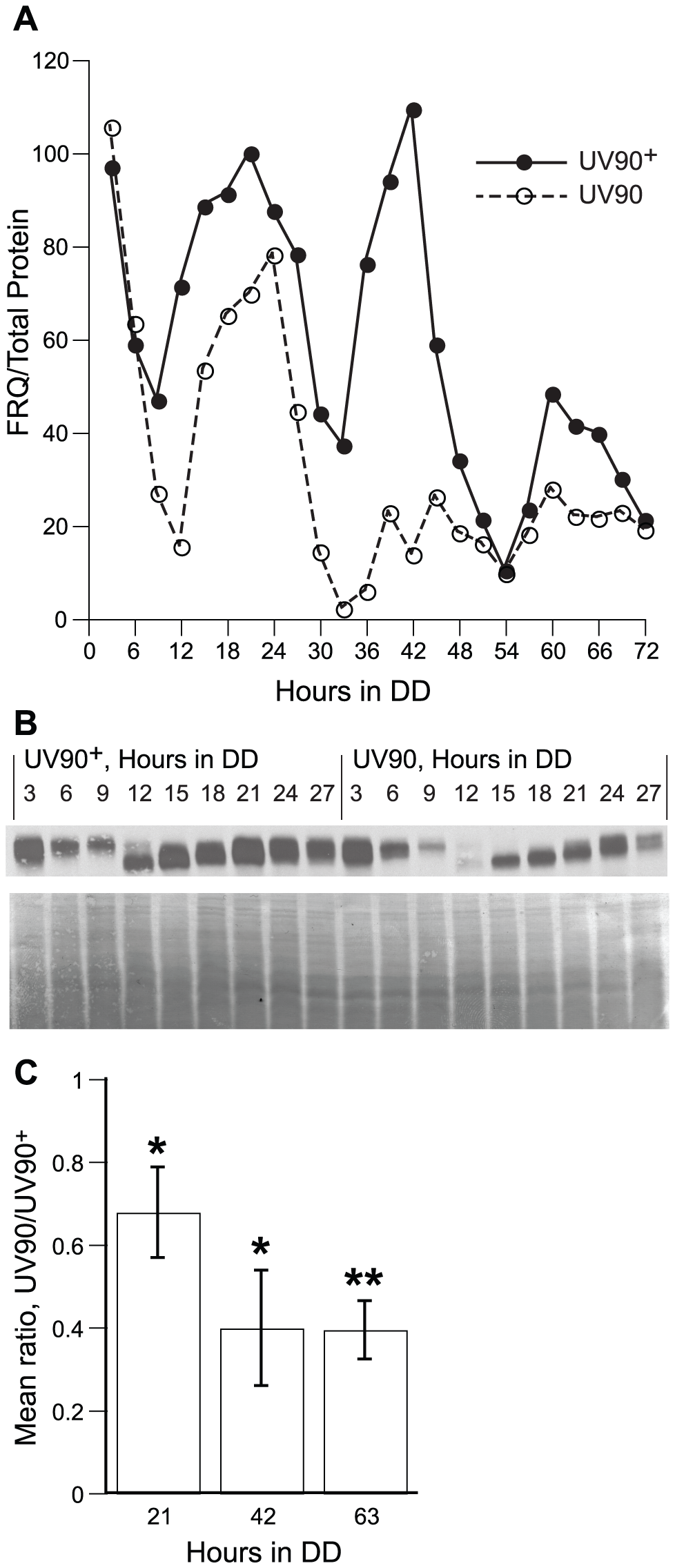 Effects of UV90 mutation on expression of FRQ protein.