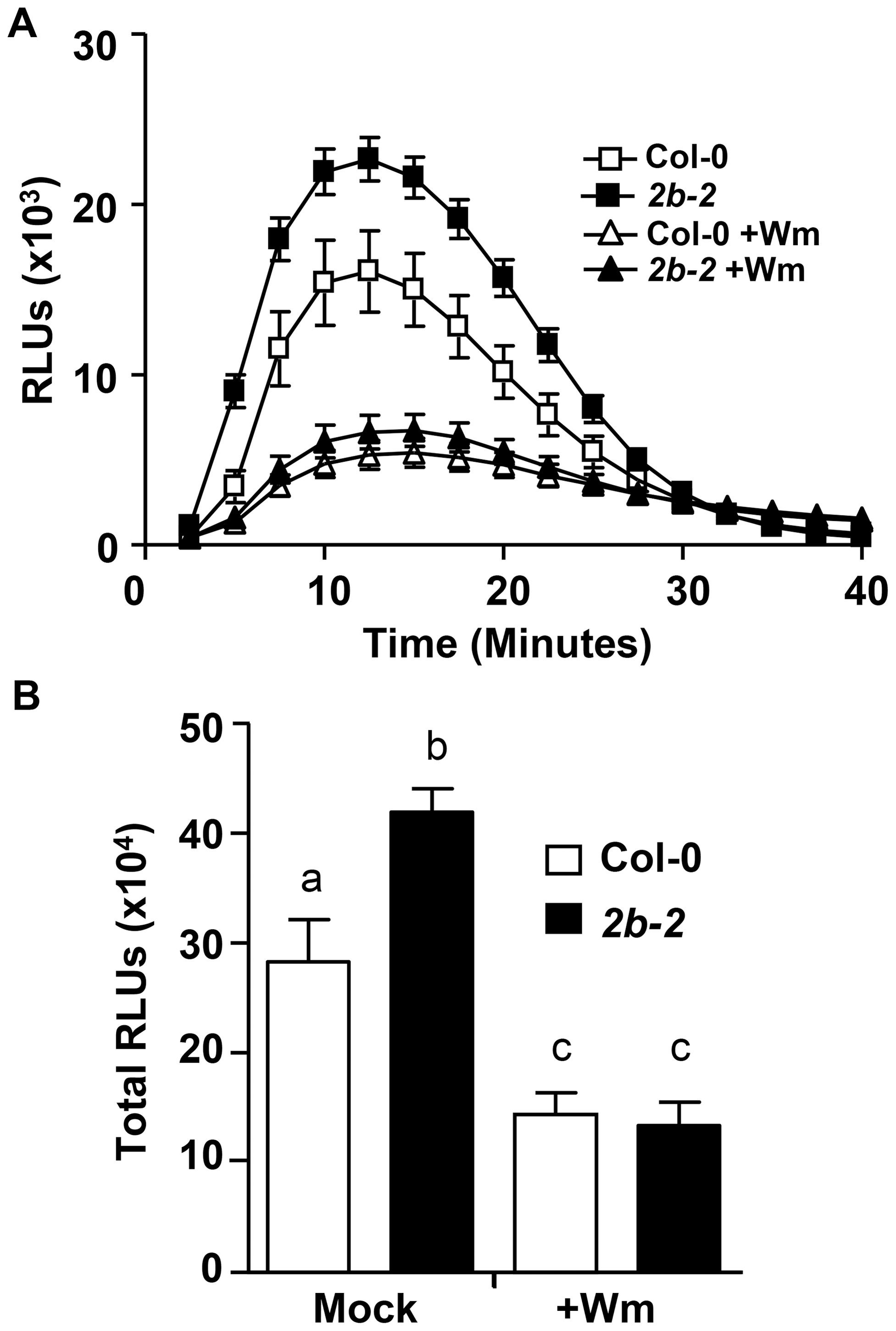 For <i>drp2b</i>, increased flg22-induced ROS production is sensitive to Wortmannin.