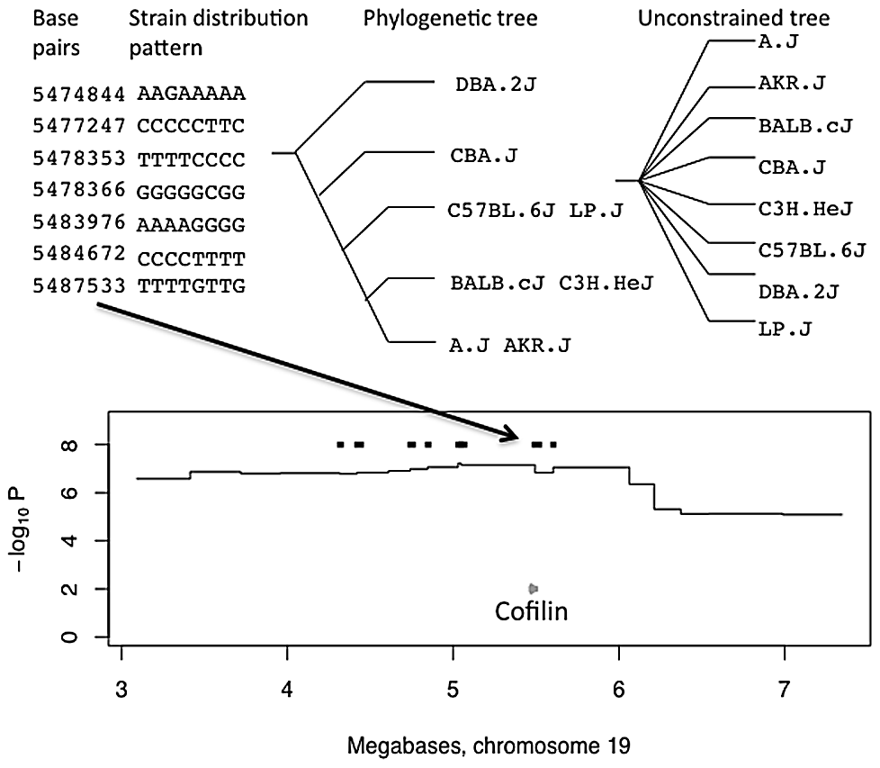 Merge analysis of a QTL on chromosome 19 for open-field activity.
