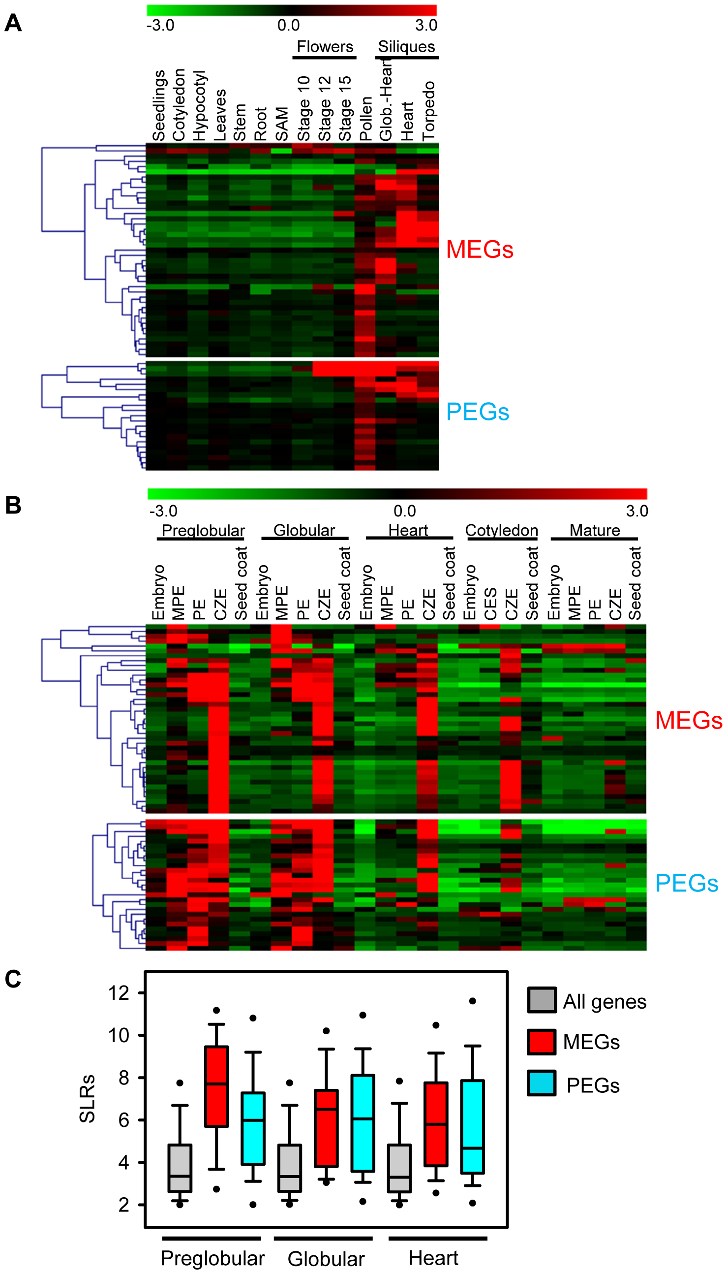 Expression Analysis of MEGs and PEGs in Vegetative and Seed Tissues.