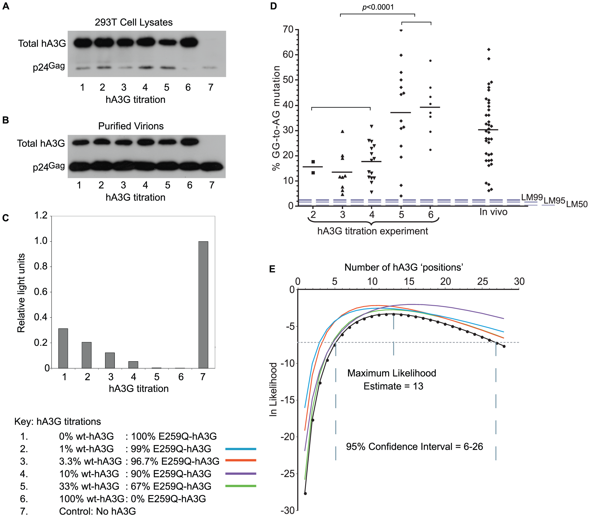 hA3G-induced mutation frequency <i>in vitro</i> and <i>in vivo</i>.