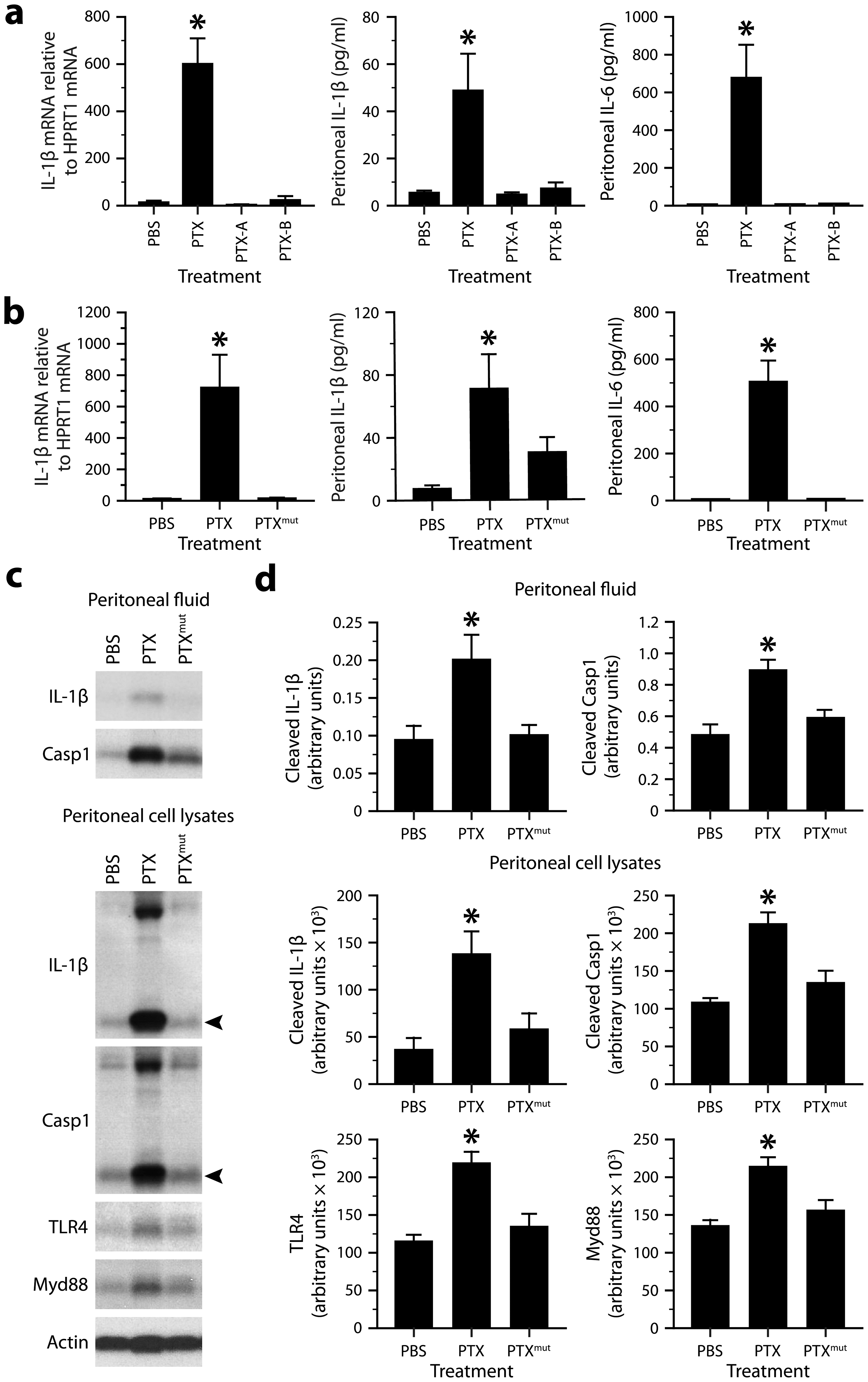 The ability of PTX to induce the IL-1β−IL-6 cascade depends on the integrity of its multimeric structure and enzymatic activity.