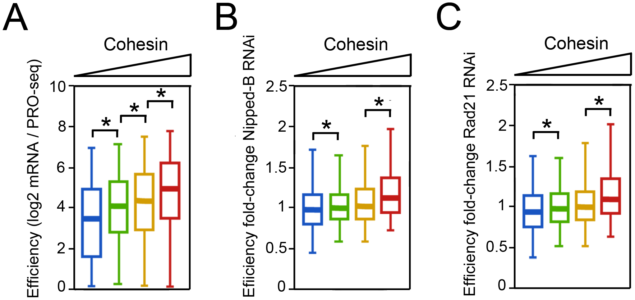 Cohesin-binding genes produce more steady state mRNA per elongating Pol II complex in BG3 cells.
