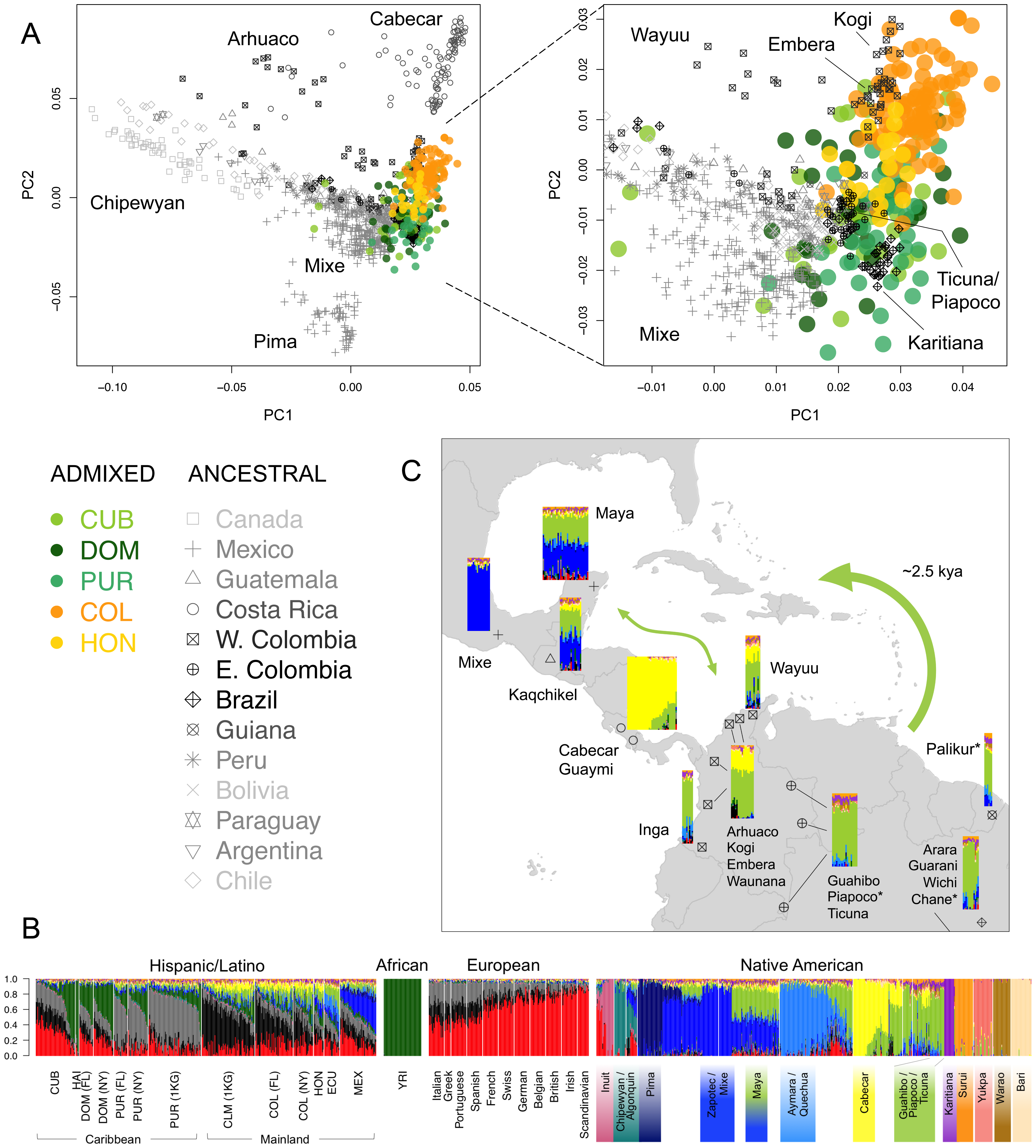 Sub-continental origin of Native American components in the Caribbean.