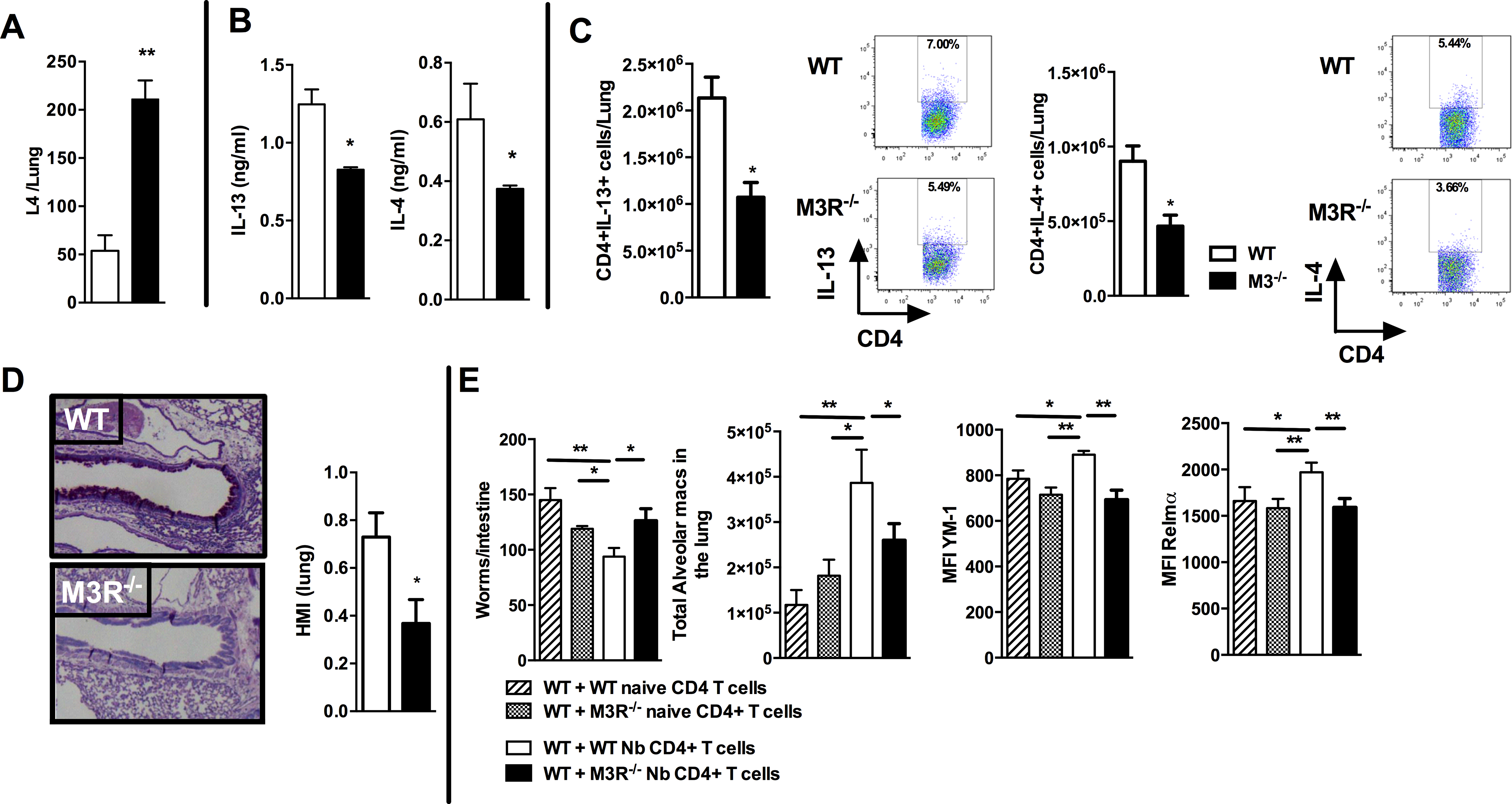 M3R deficient mice have impaired memory immune responses during secondary infection with <i>N. brasiliensis</i>.