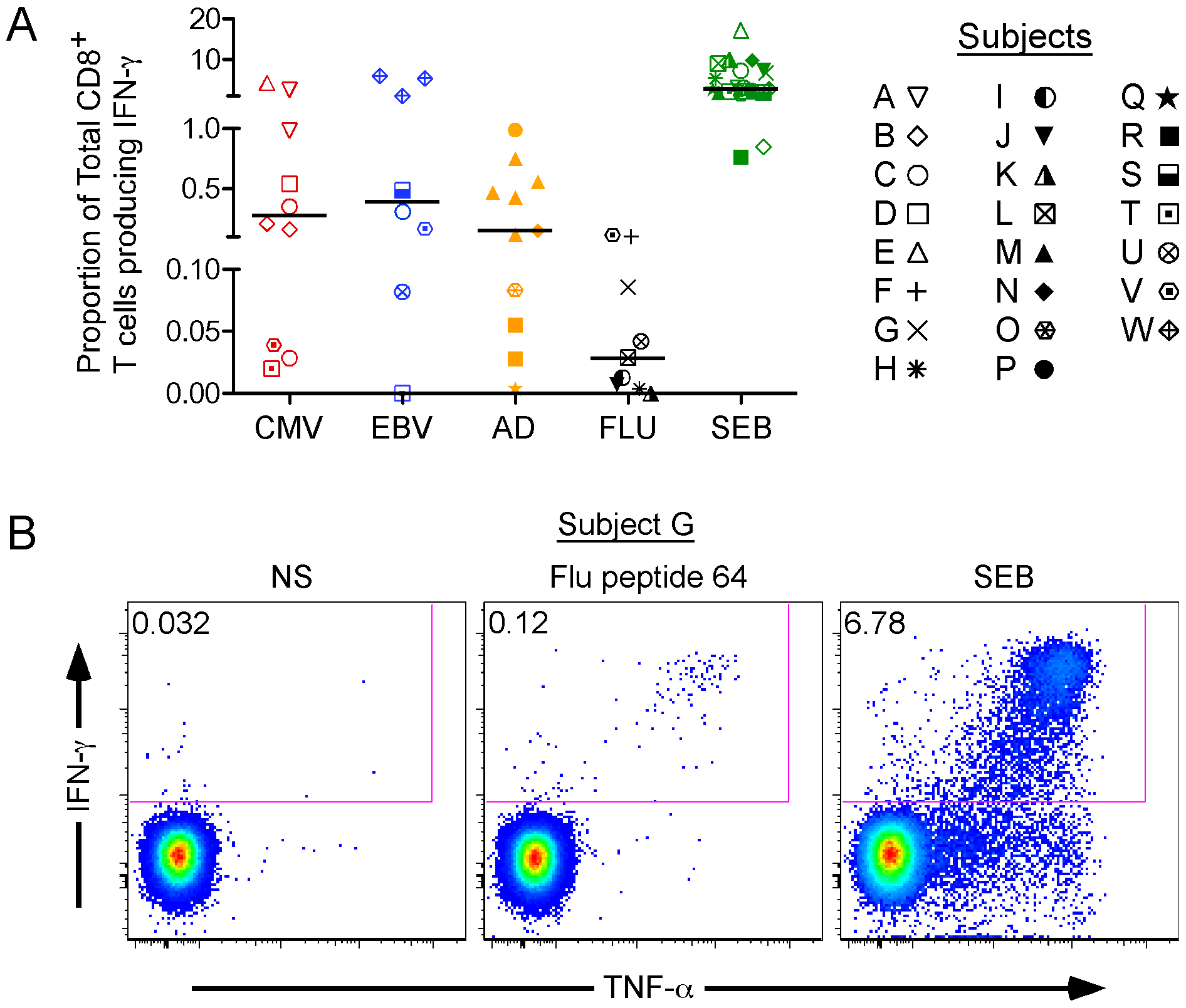 IFN-γ production as a basal marker of activation for antiviral CD8<sup>+</sup> T cells.