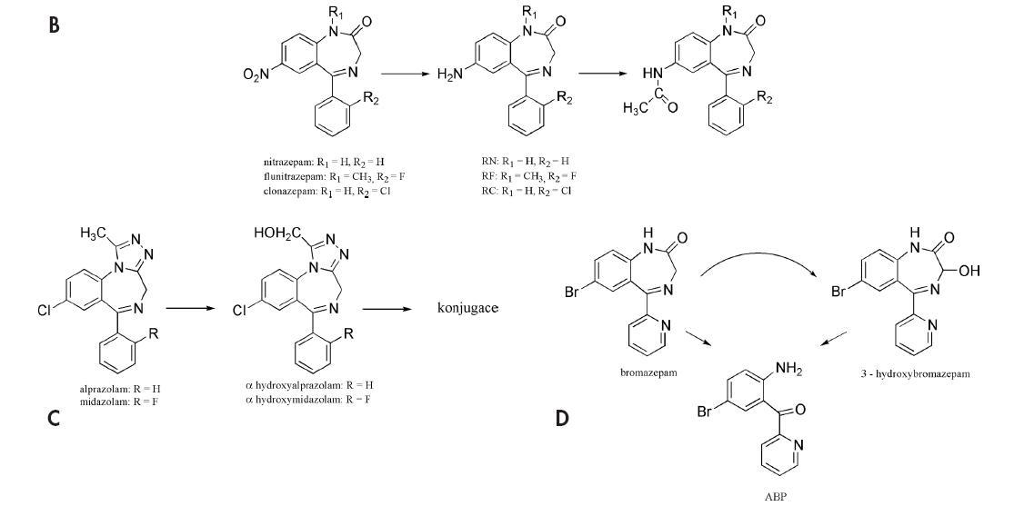 Obr. 1. Znázornění různých metabolických cest benzodiazepinů s naznačením dalších kroků významných pro vznik charakteristických struktur: vznik bezofenonů MACB a ACB (A), redukce NO<sub>2</sub> skupiny clonazepamu, flunitrazepamu a nitrazepamu (B), α hydroxylace alprazolamu a midazolamu (C) a vznik ABP hydrolýzou bromazepamu a jeho metabolitu (D).