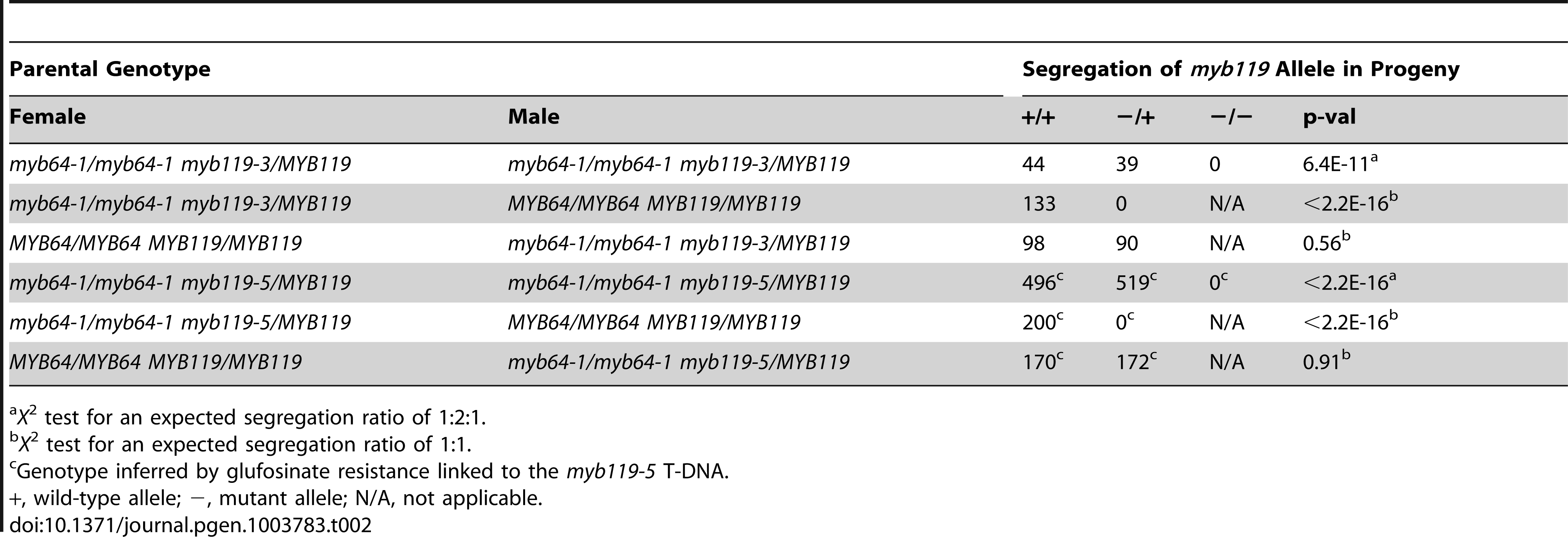 Segregation of <i>myb119</i> alleles.