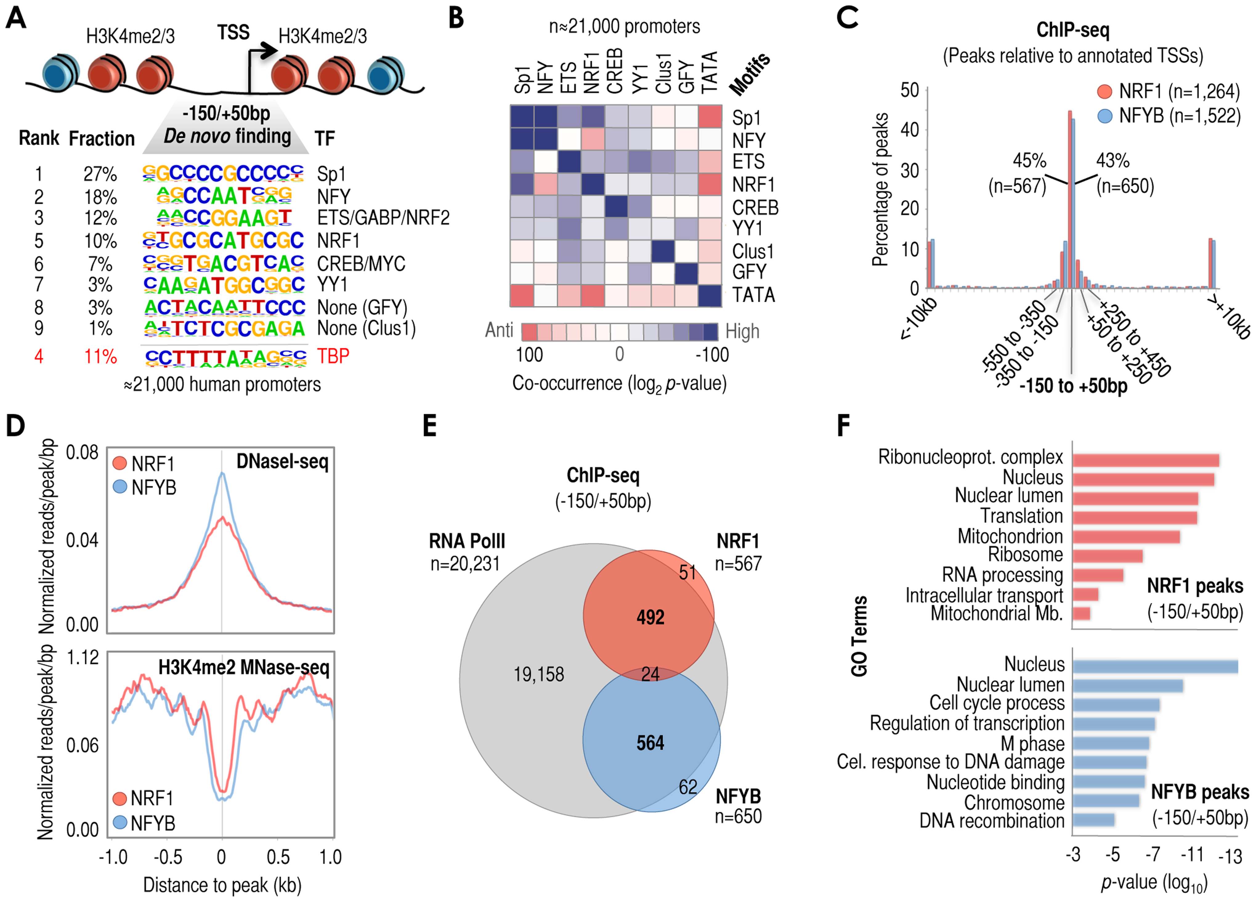 A series of cis-regulatory elements (here termed 'cardinal' motifs) are highly enriched at −150/+50 bp relative to TSS (+1) and may define different subsets of human promoters.