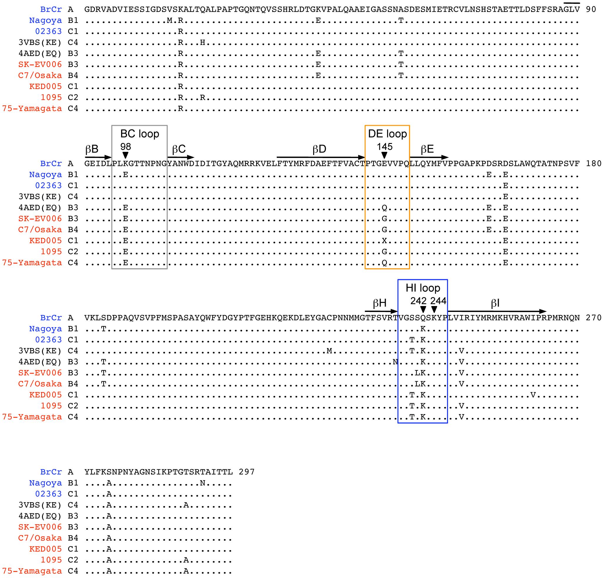 Alignment of EV71 VP1 sequences.