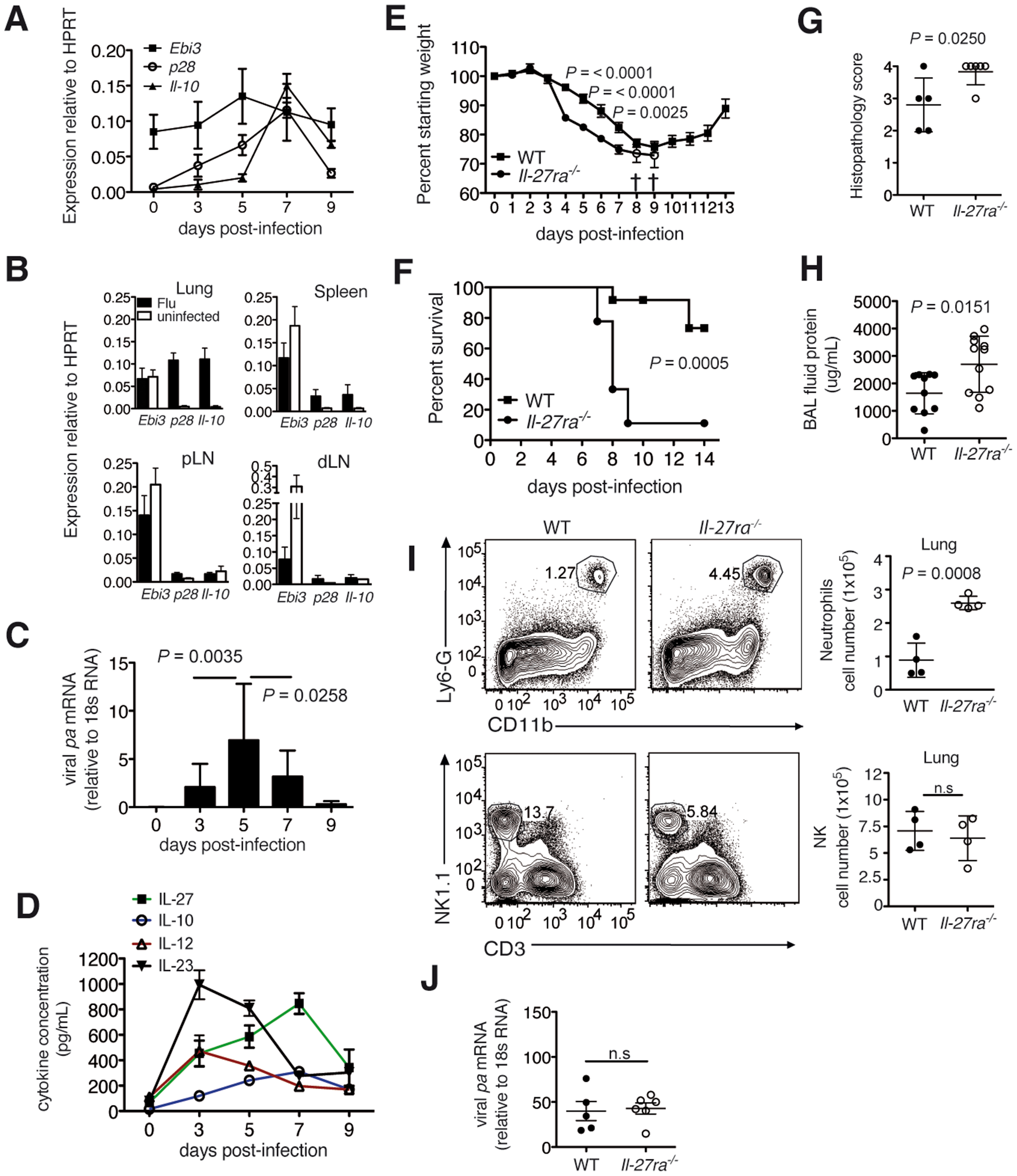 Absence of IL-27Rα leads to increased mortality and immunopathology during influenza.
