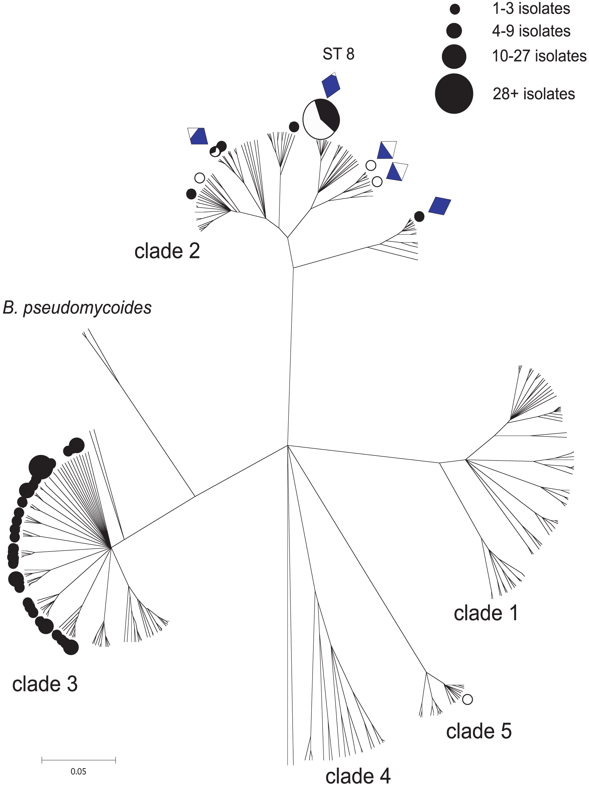 A CLONALFRAME genealogy of the <i>Bacillus cereus</i> group indicating the niche/habitat associations of STs recovered in this study.