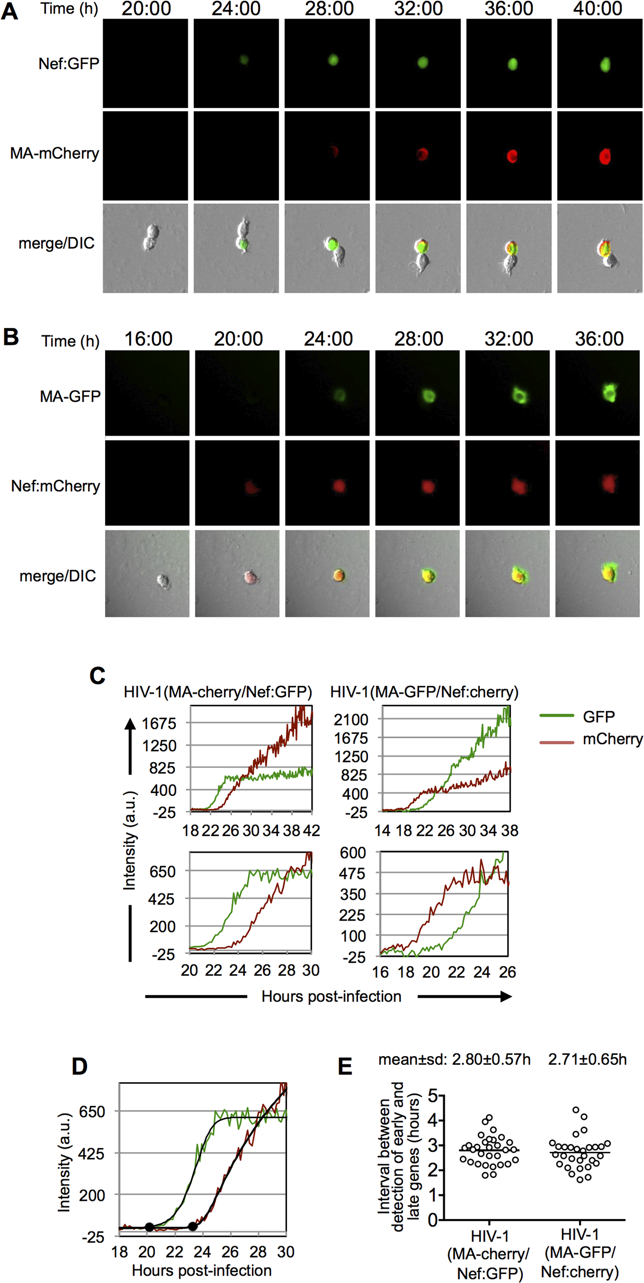 Dynamics of early and late gene expression in individual cells.