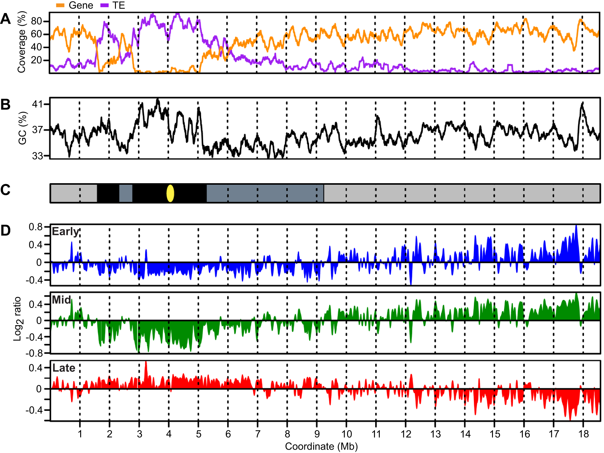 <i>Arabidopsis</i> chromosome 4 with replication profiles for early, mid, and late S phase suspension culture cells.