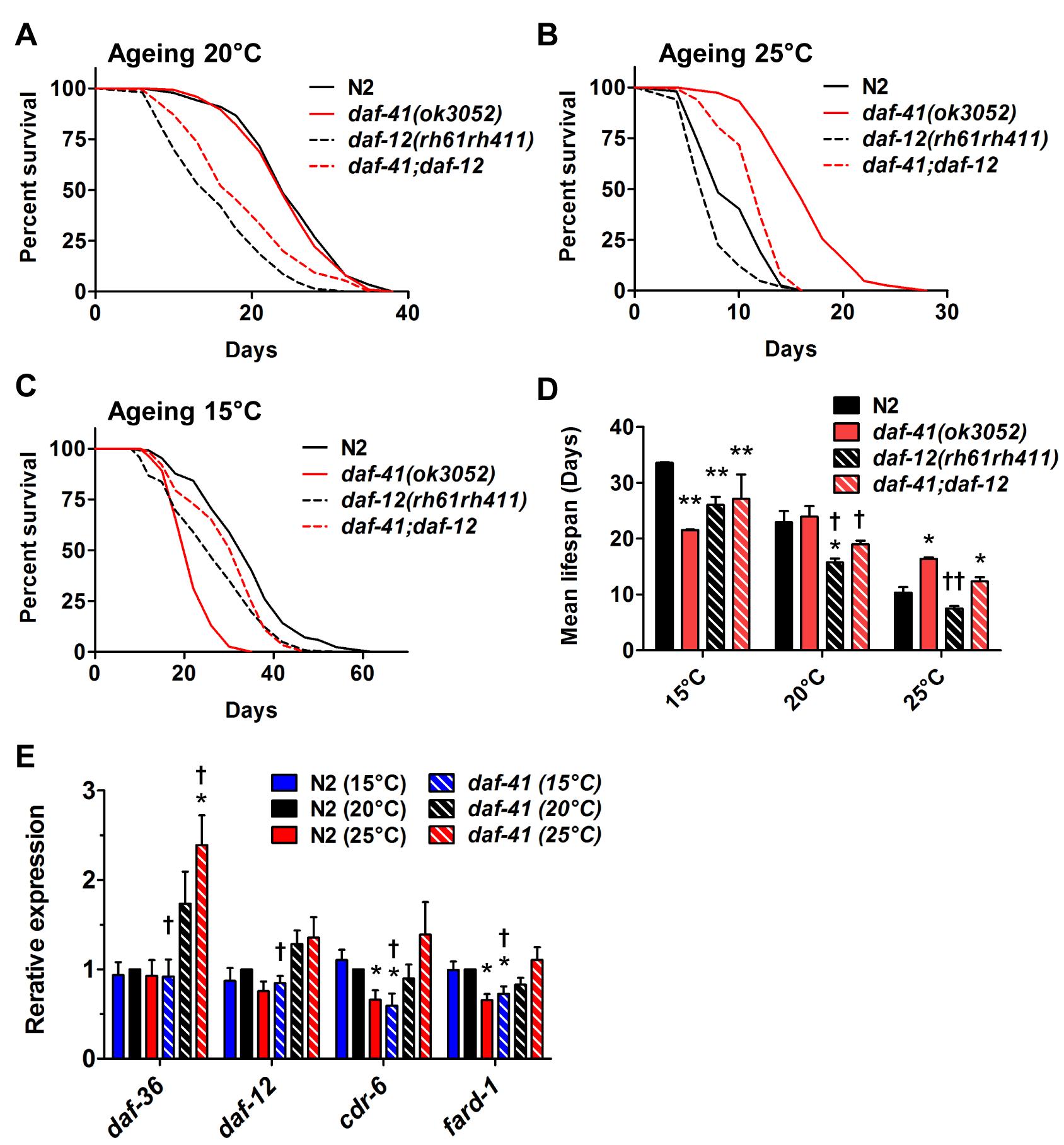 The short life span of <i>daf-41(ok3052)</i> at 15°C is <i>daf-12</i> dependent.