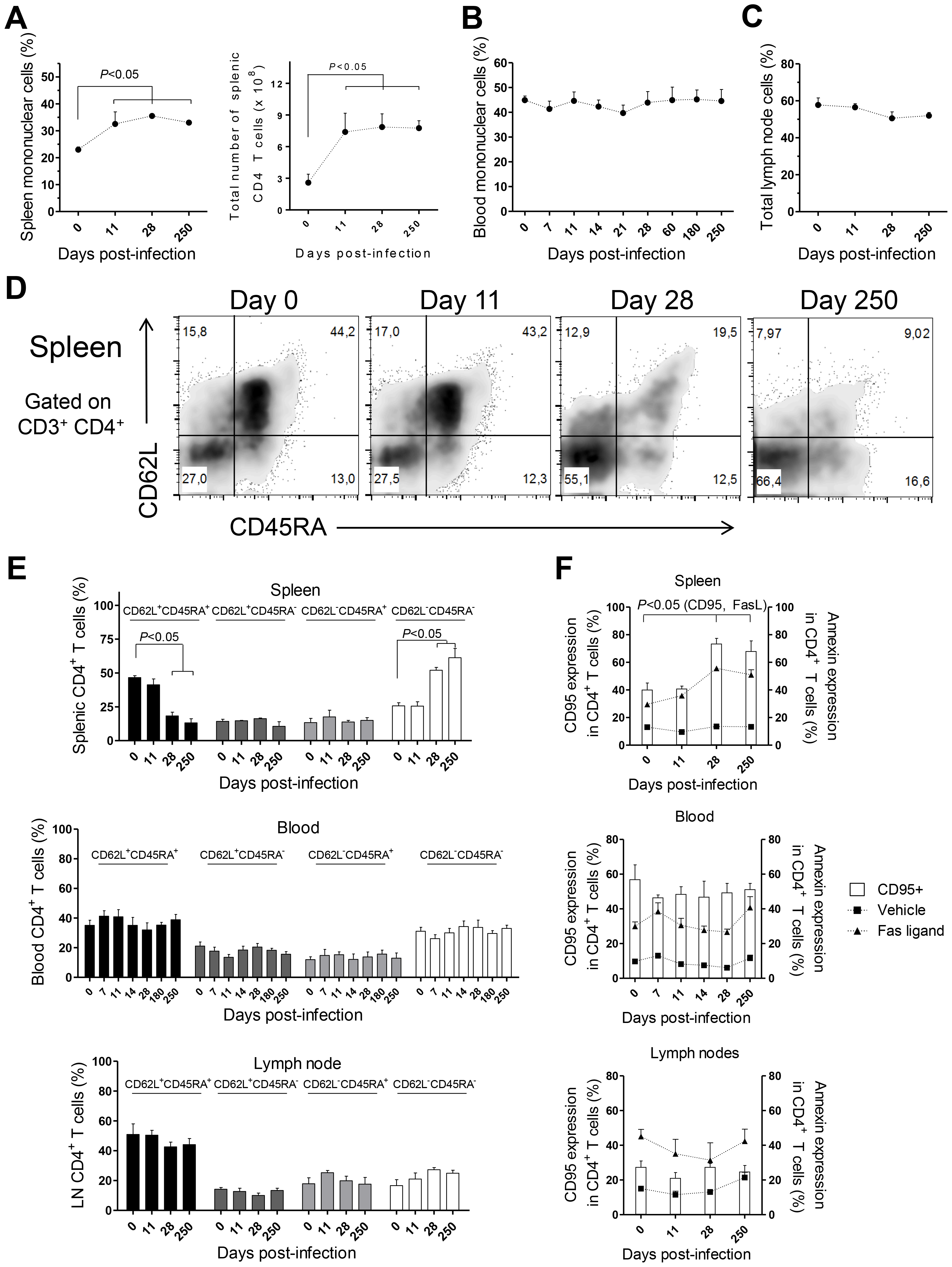 CD4 T cell dynamics in <i>L. infantum</i>-infected rhesus macaques.