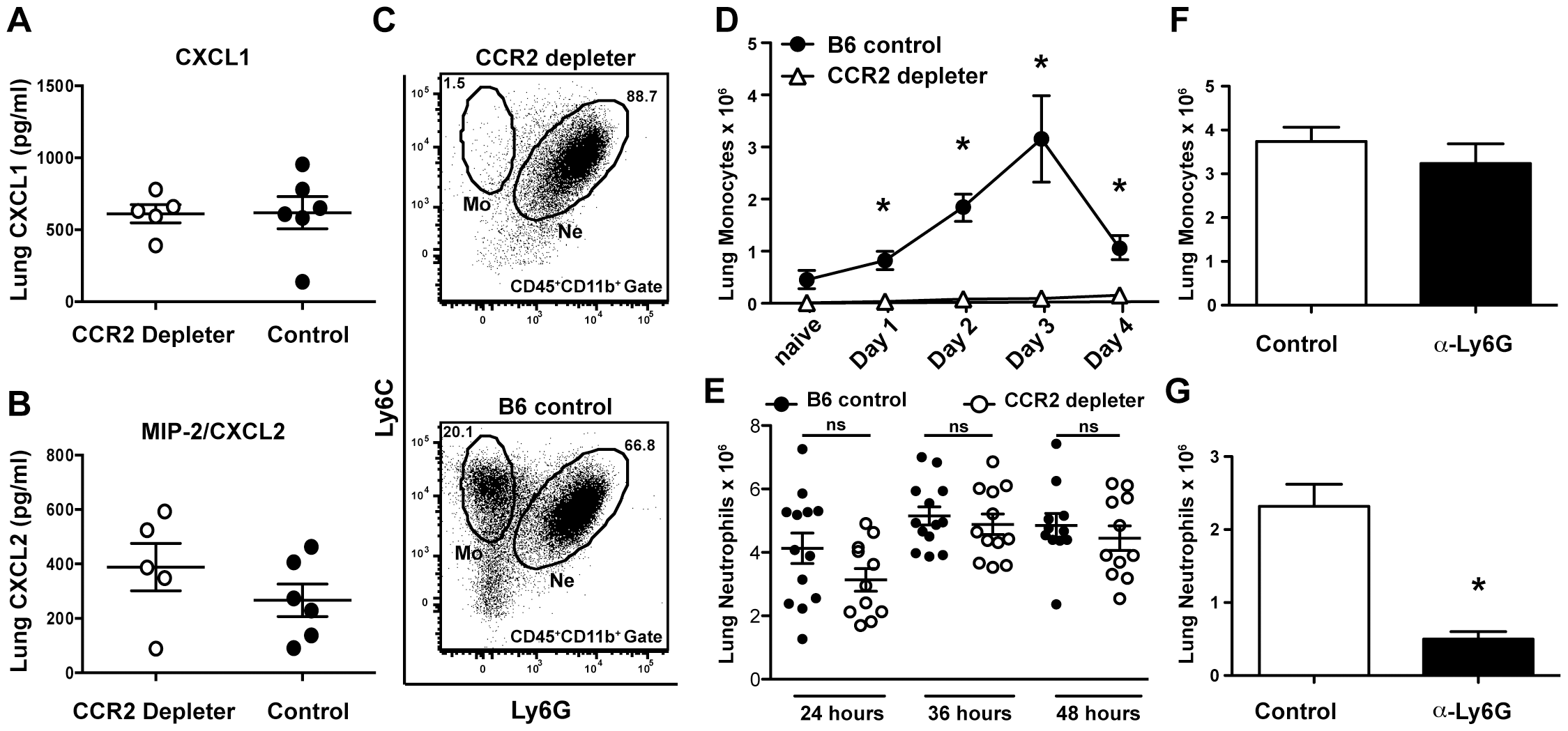 CCR2<sup>+</sup> cells are dispensable for the production of neutrophil chemokines and neutrophil recruitment.