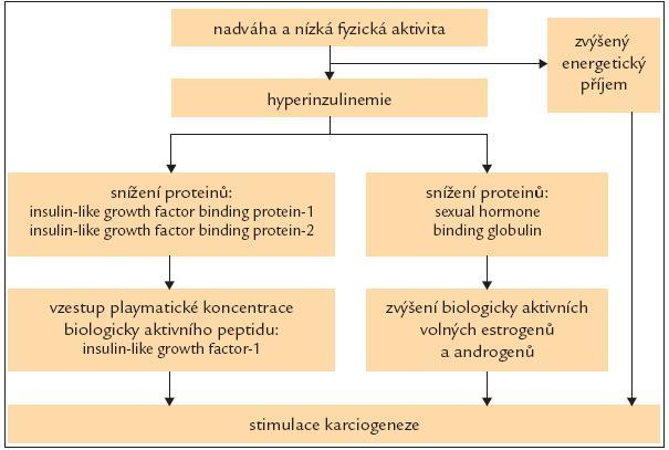 Schéma 1. Patofyziologické souvislosti nadváhy se vznikem karcinomu.