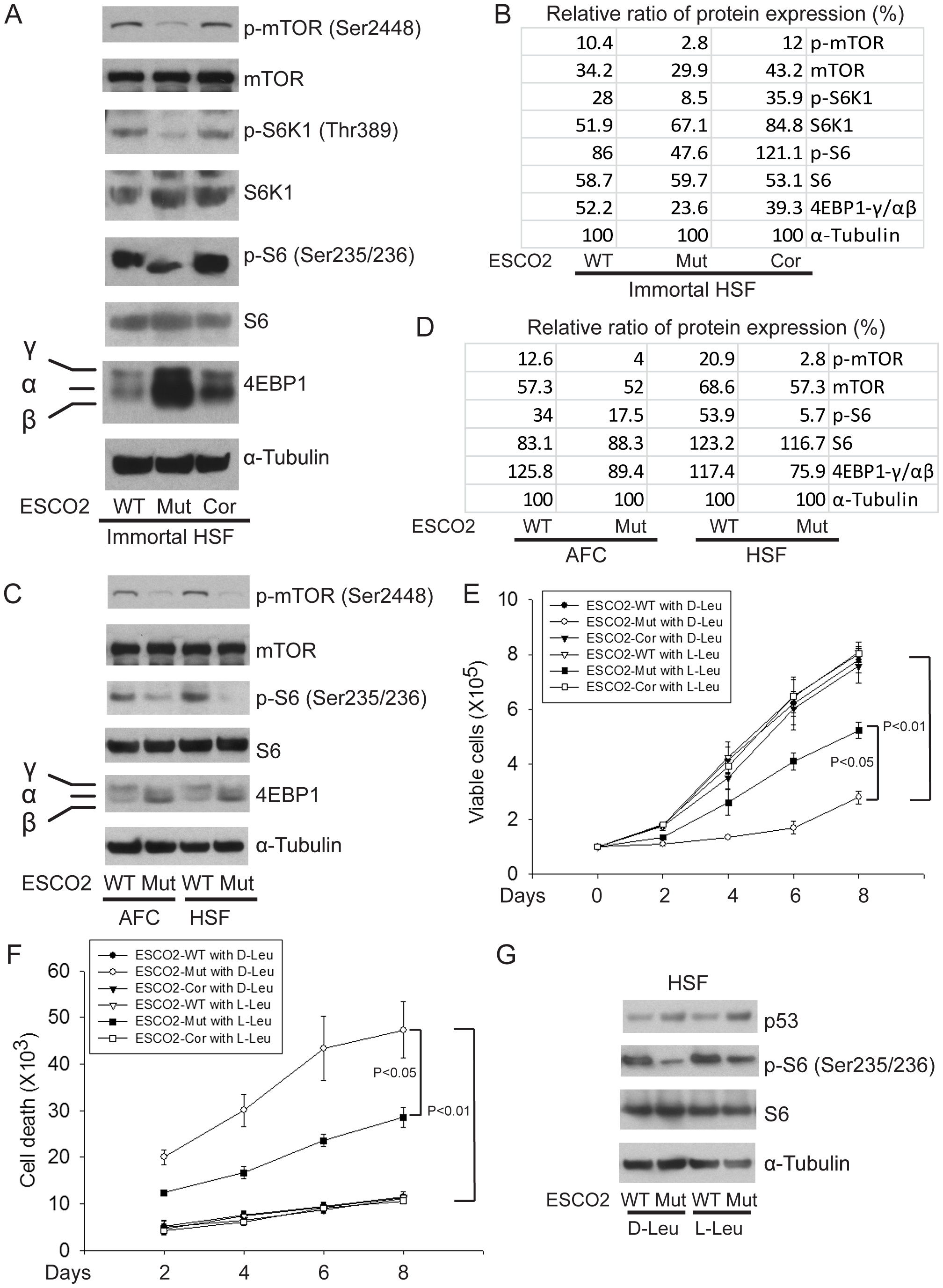 ESCO2 mutation is associated with mTOR inhibition in RBS cells.