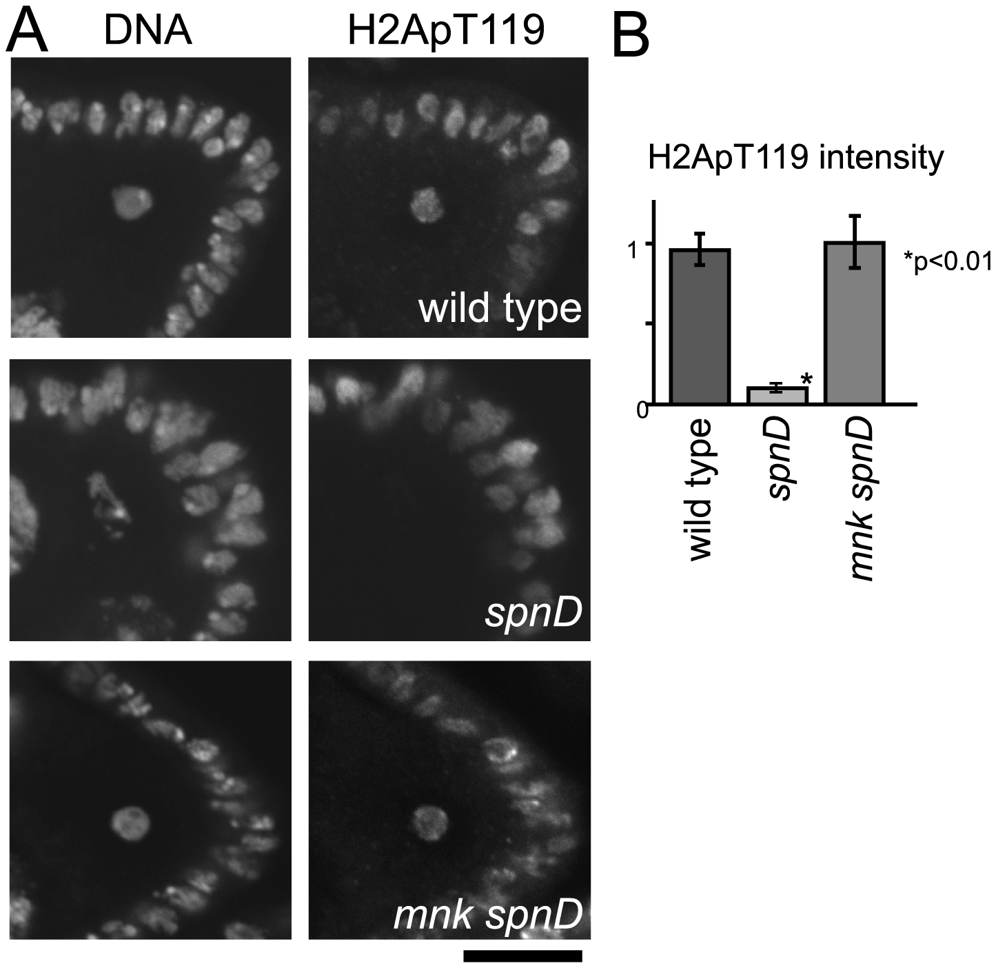 The meiotic recombination checkpoint suppresses NHK-1 activity.