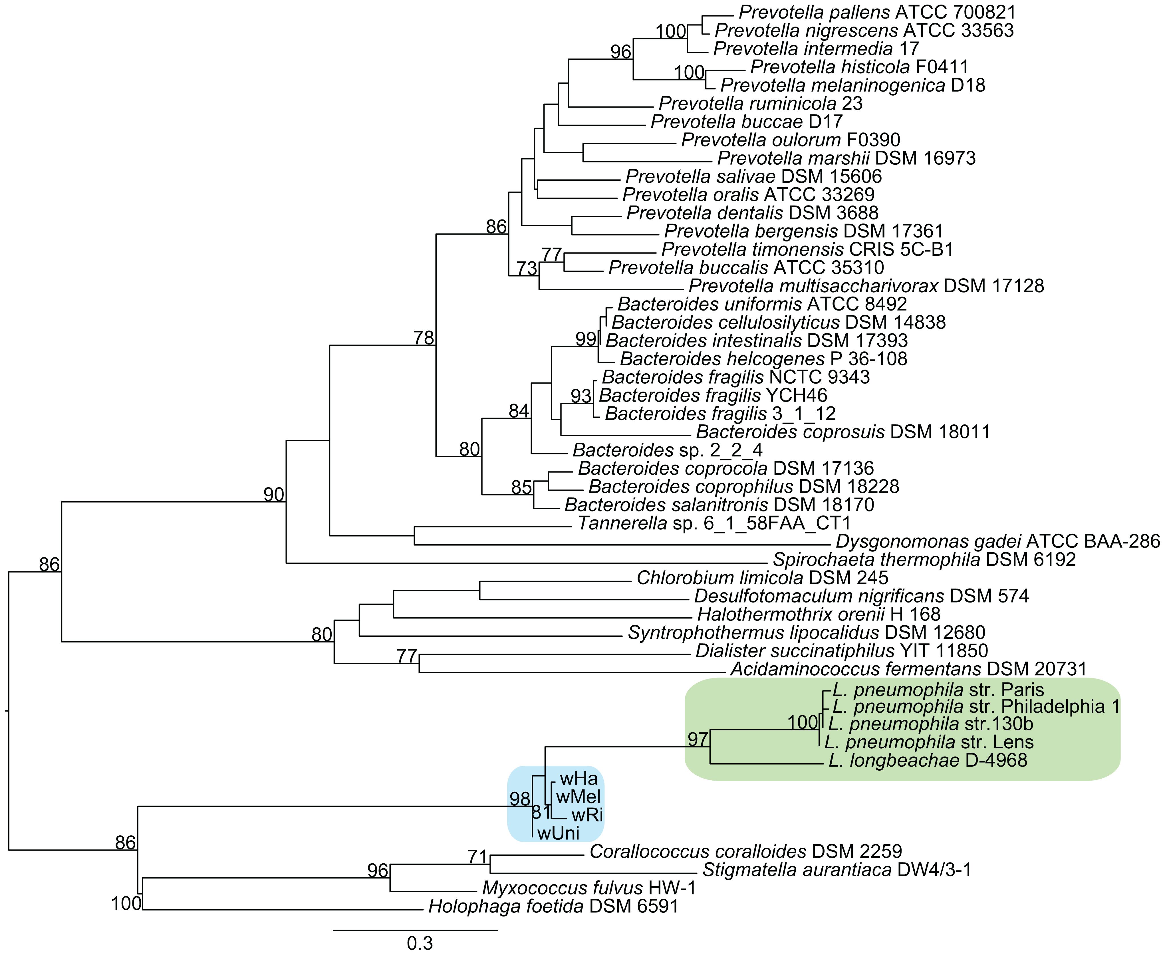 Phylogenetic analysis of the ArgR repressor gene.