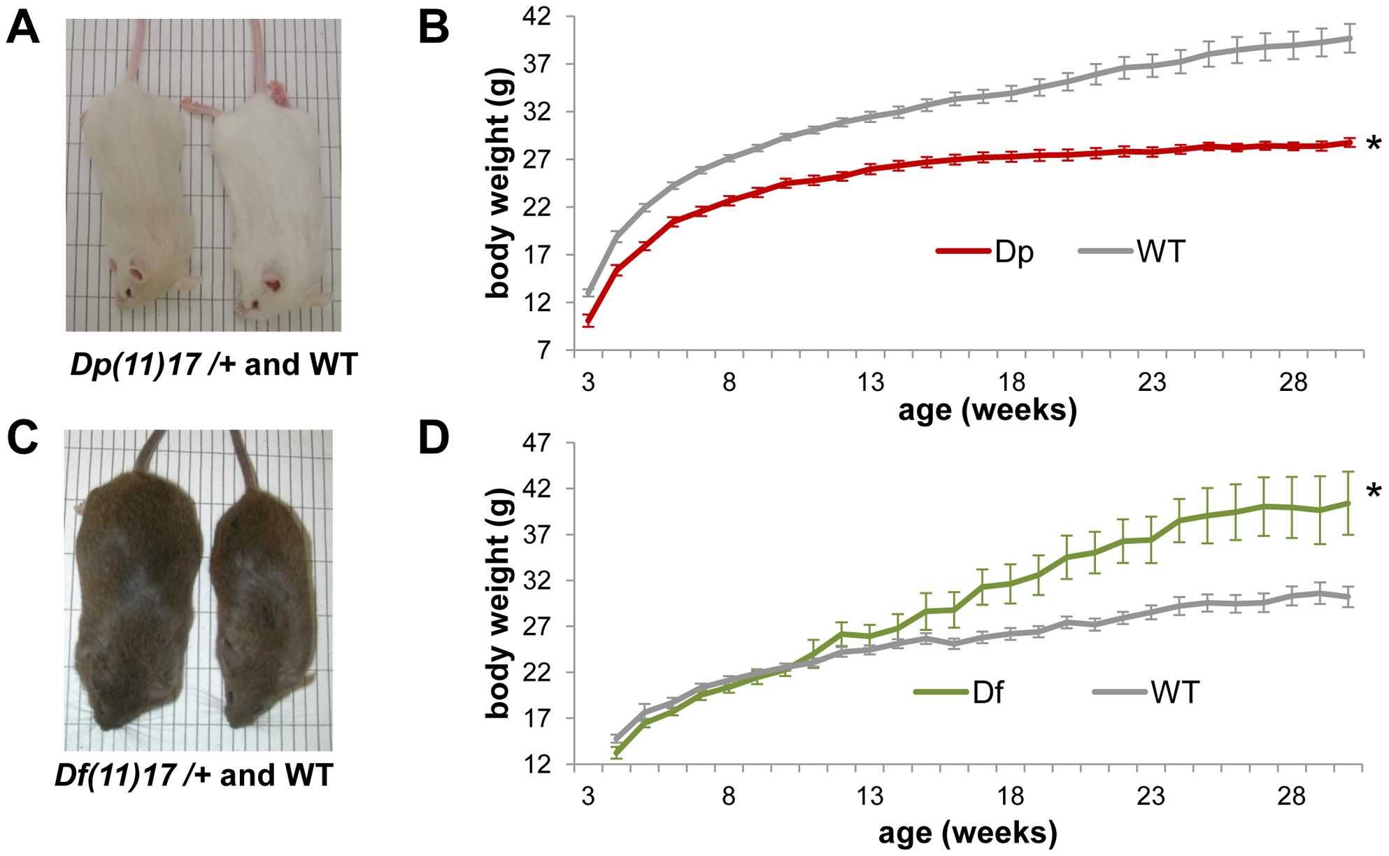 <i>Dp(11)17/+</i> mice have reduced and <i>Df(11)17/+</i> mice have increased body weight.