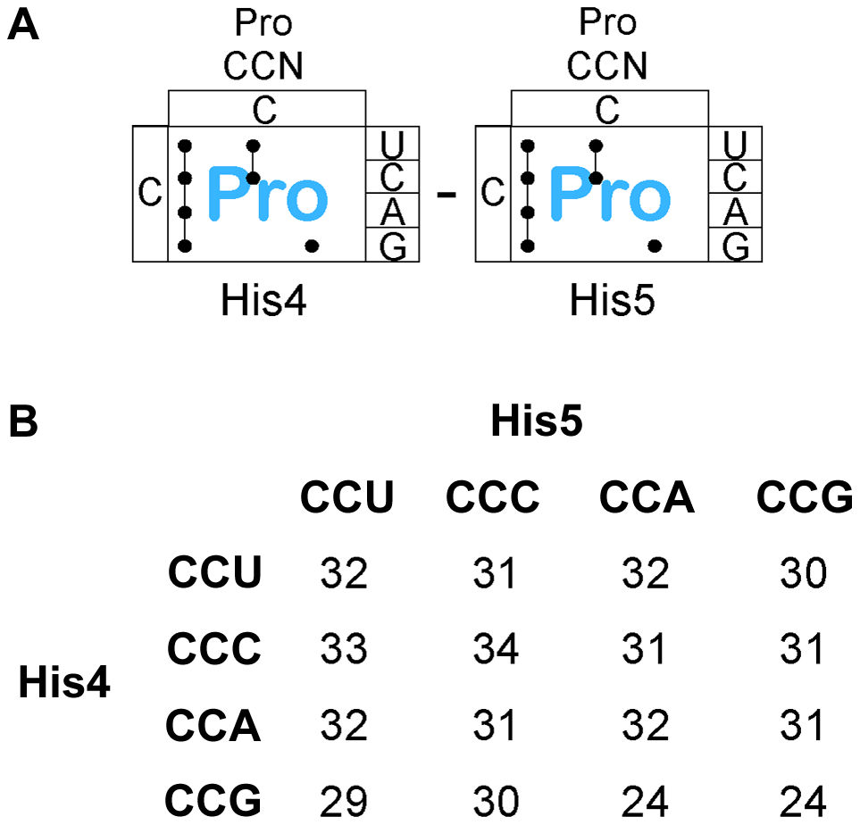 Expression of the <i>his</i> operon for specific proline codons at His4-His5 of the His leader on ribosome stalling.